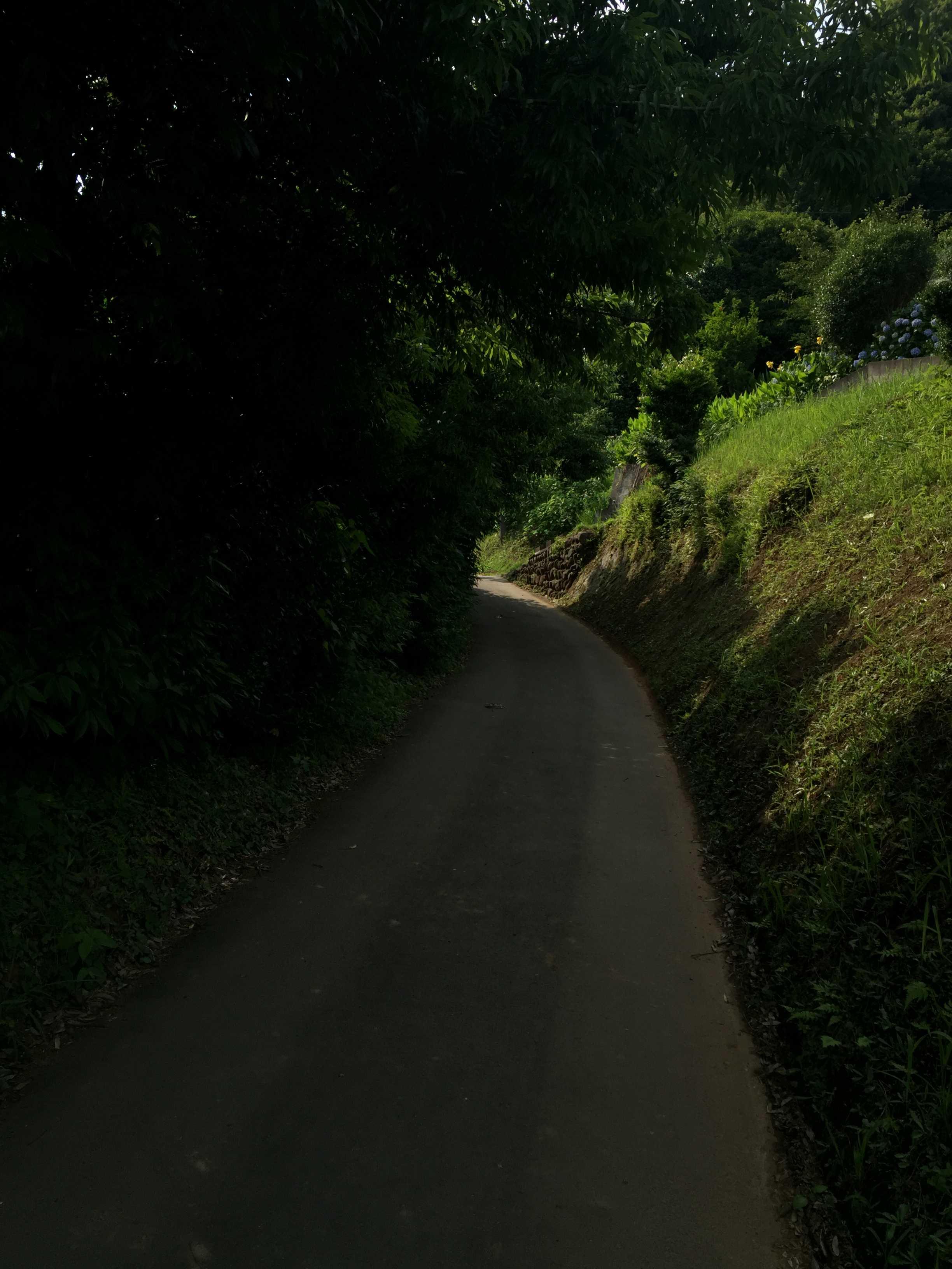 木陰に覆われた道