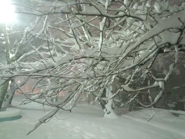 大雪と木の枝