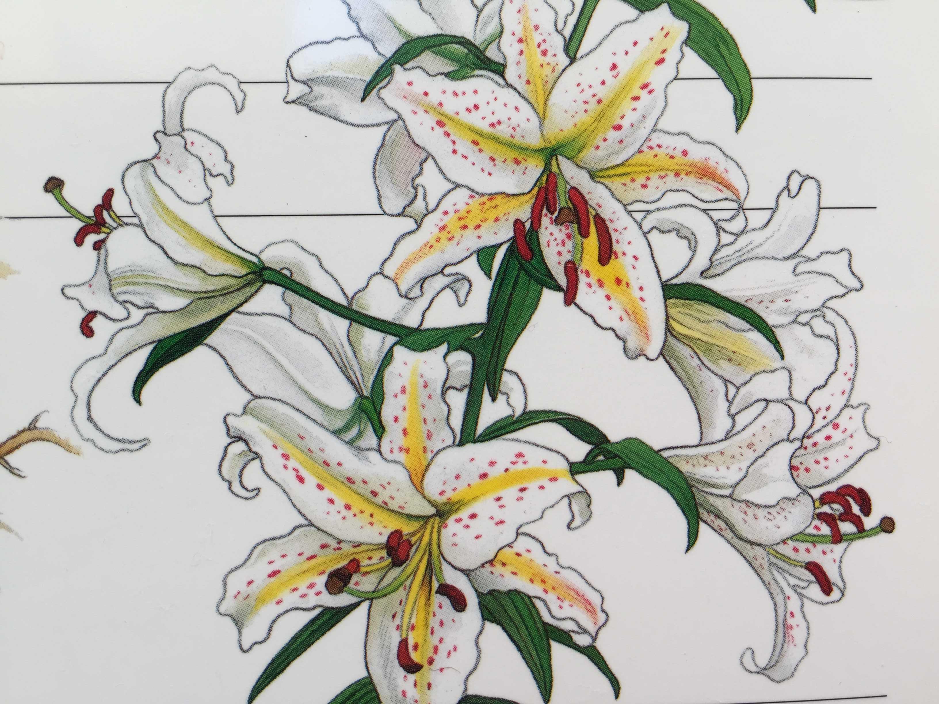 ヤマユリ -球根の増殖と花の楽しみ方、自生地復元- 小俣虎雄