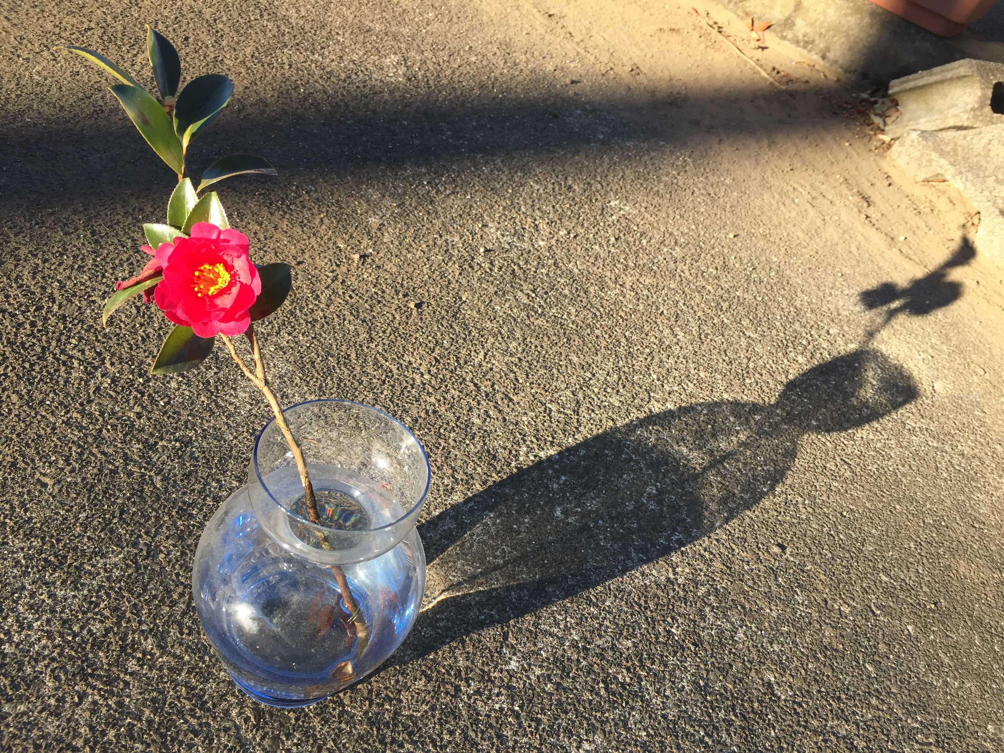 一輪挿しのガラスの花瓶に生けたタチカンの勘次郎