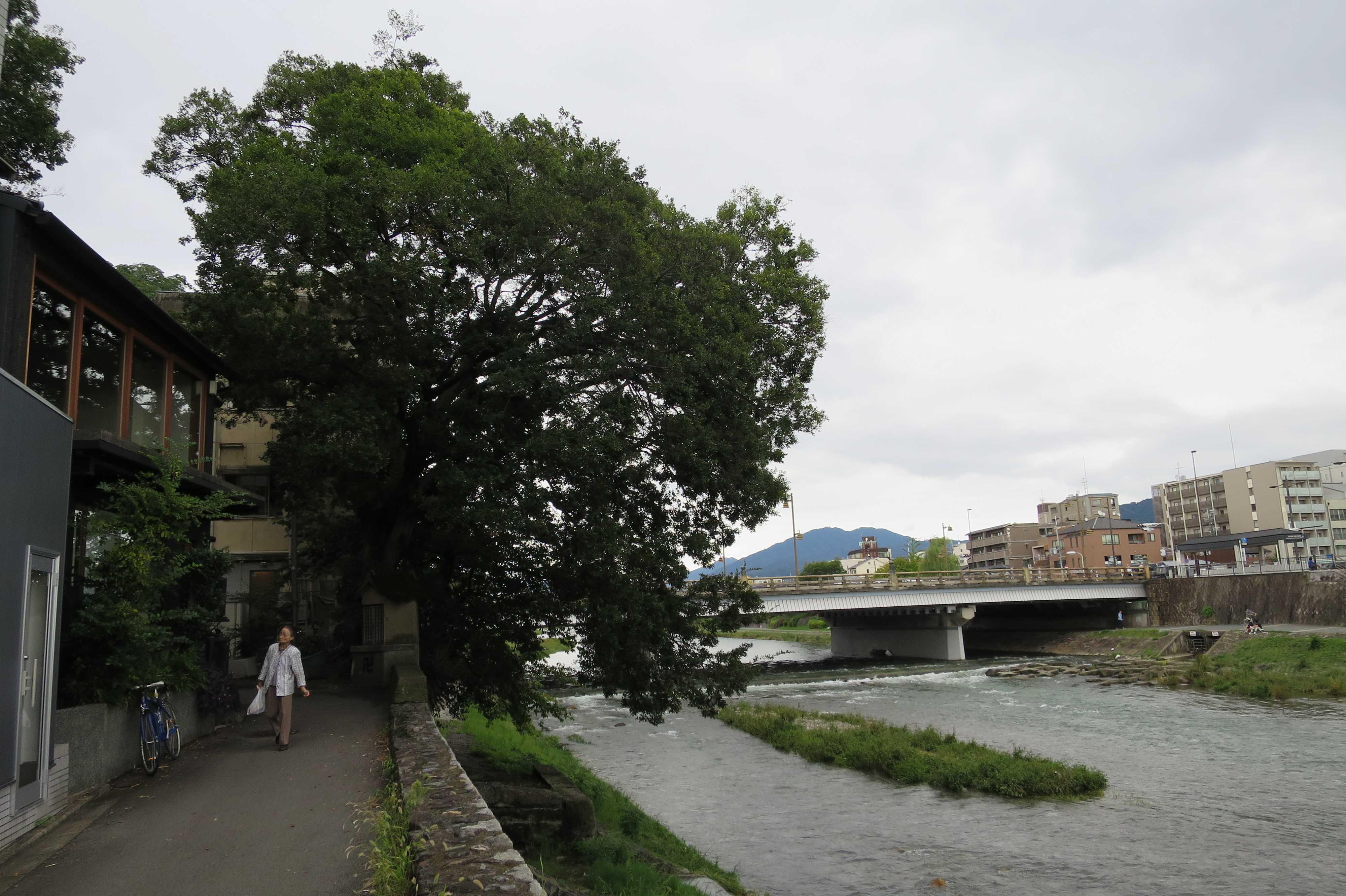 京都・五条 - 風情ある川辺の道の景色