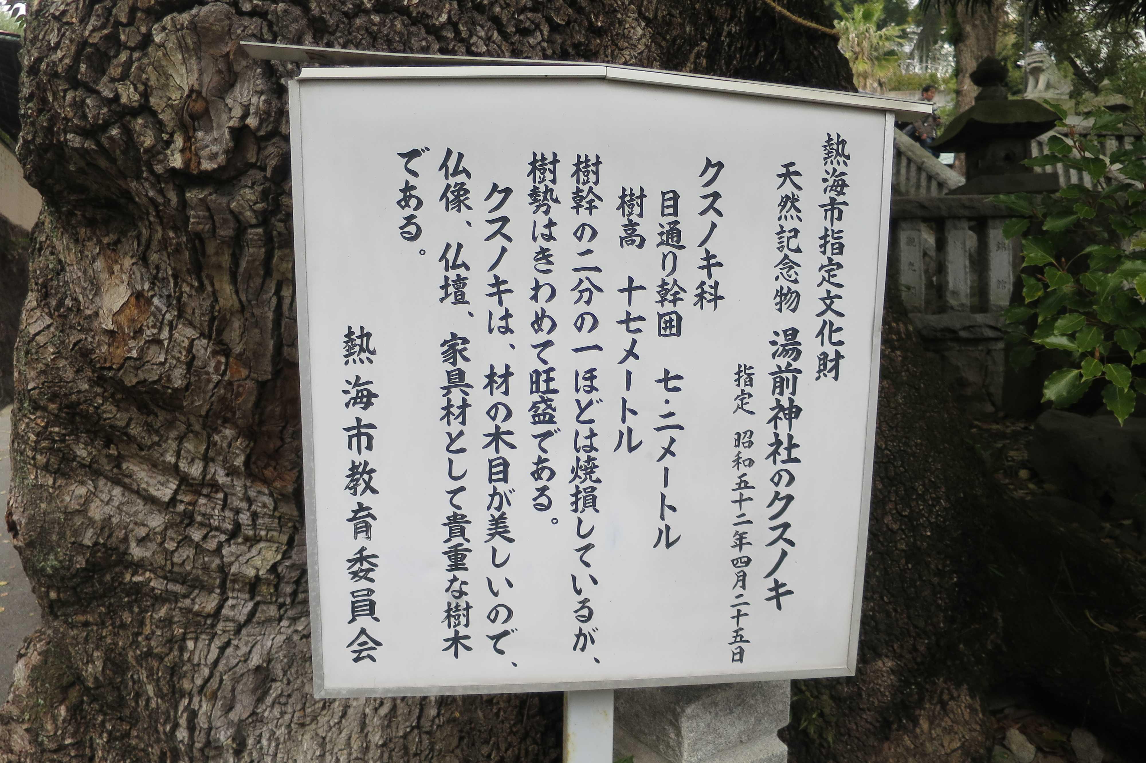 天然記念物 湯前神社のクスノキ