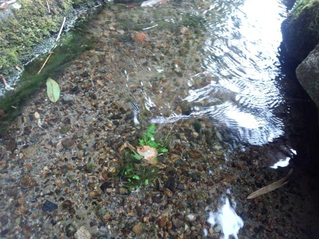 黒川清流公園の清らかな水の流れ