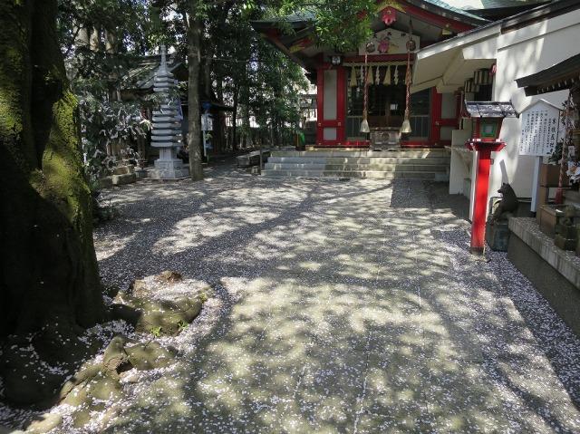 子安神社の桜の花びら