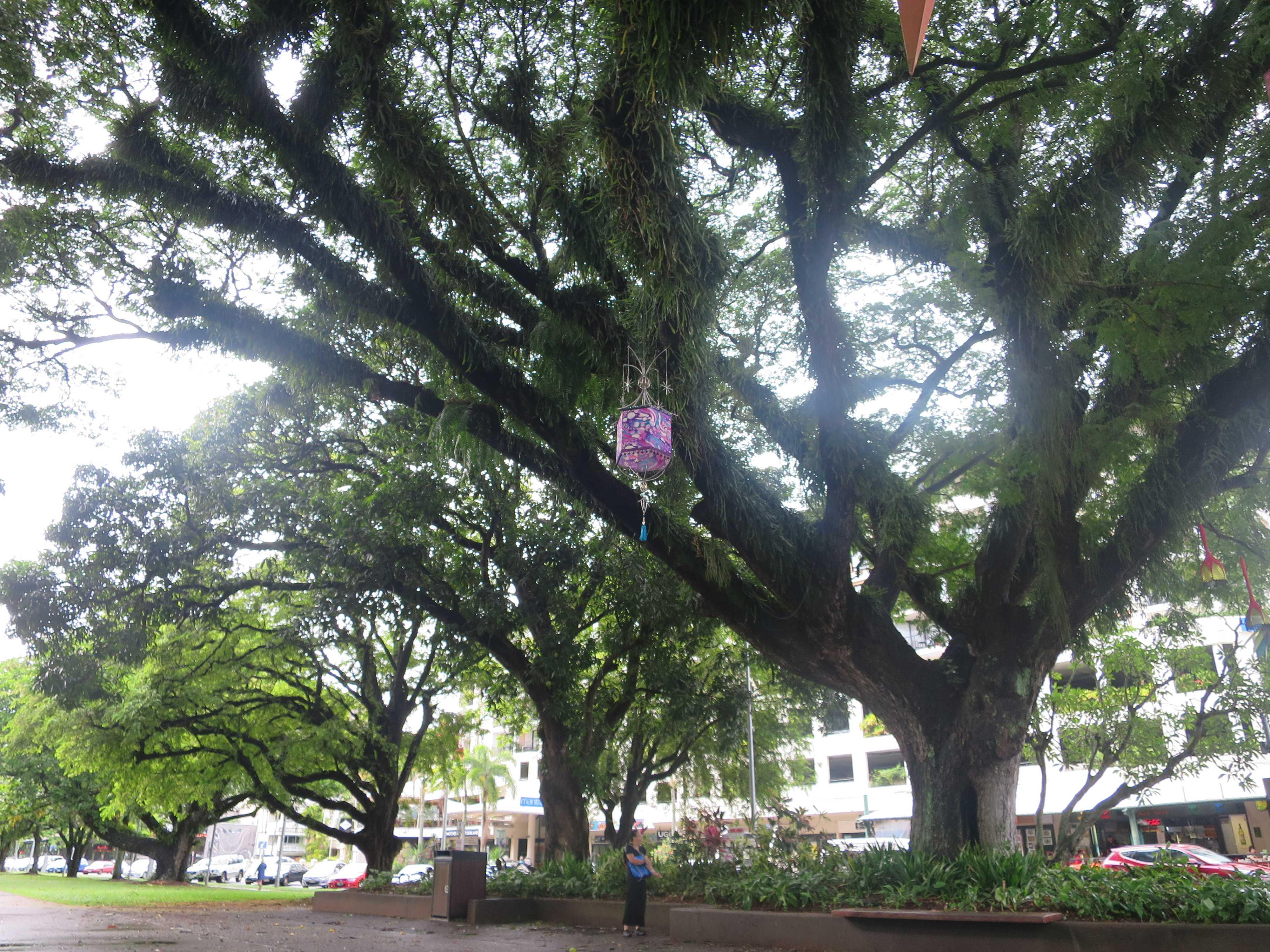 ガジュマル - 幸せを呼ぶ木