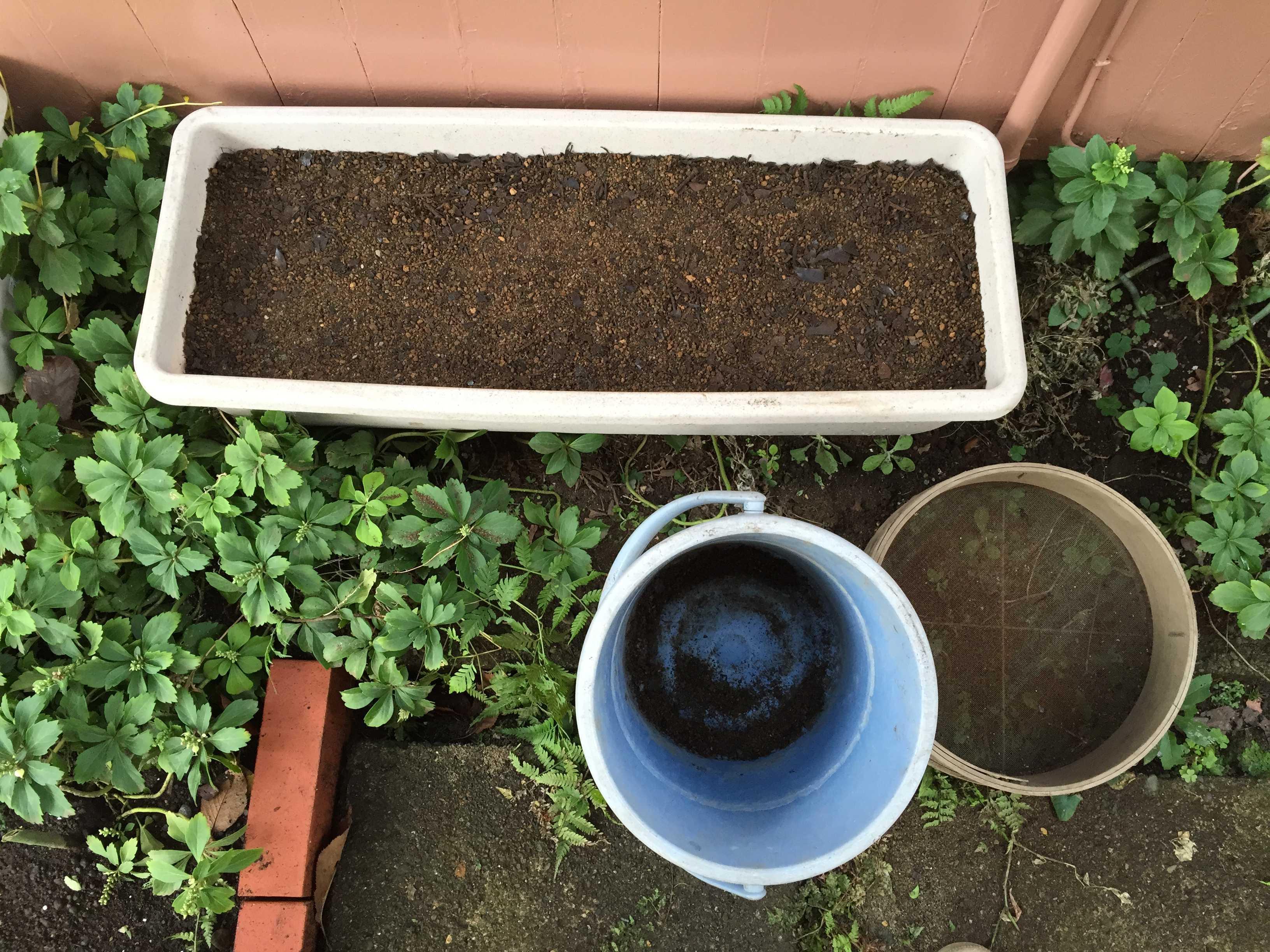 ヤマユリの種蒔き完了