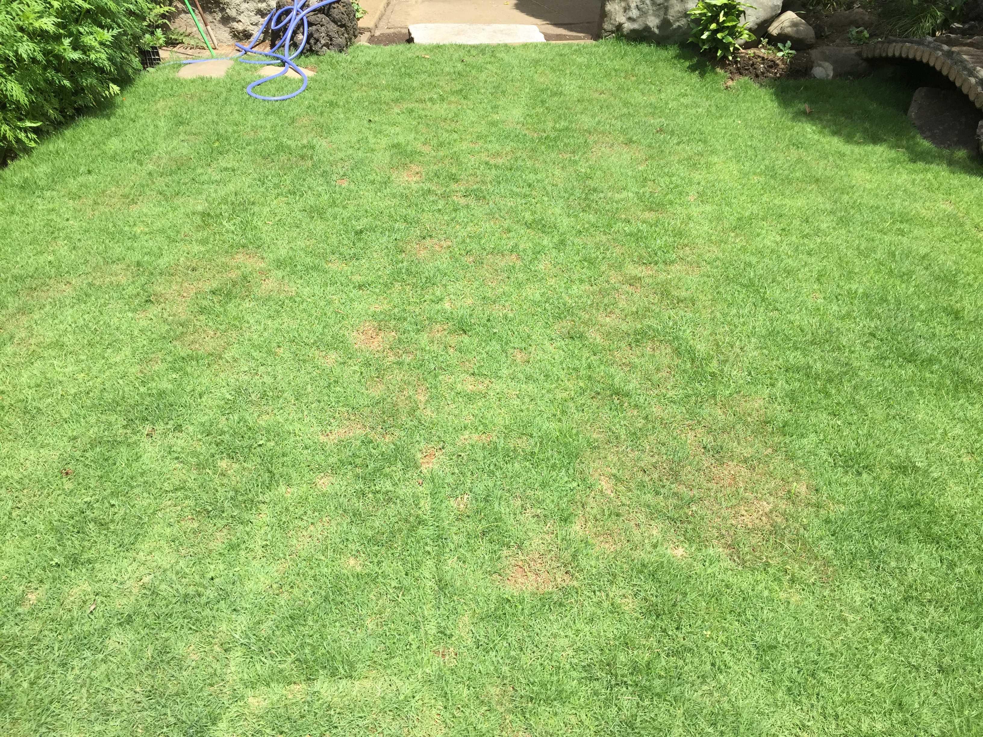 植え付け 2ヶ月後、一面緑になった TM9(ティーエムナイン)