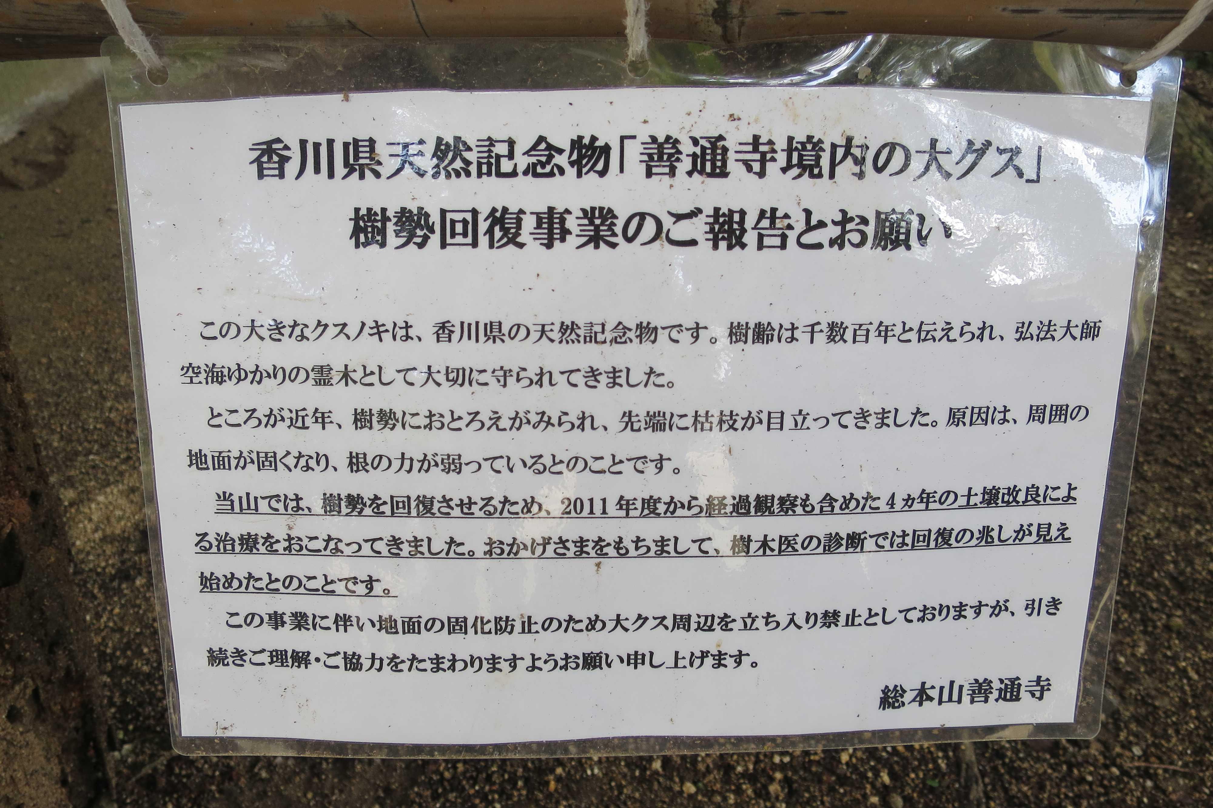 香川県天然記念物「善通寺境内の大グス」
