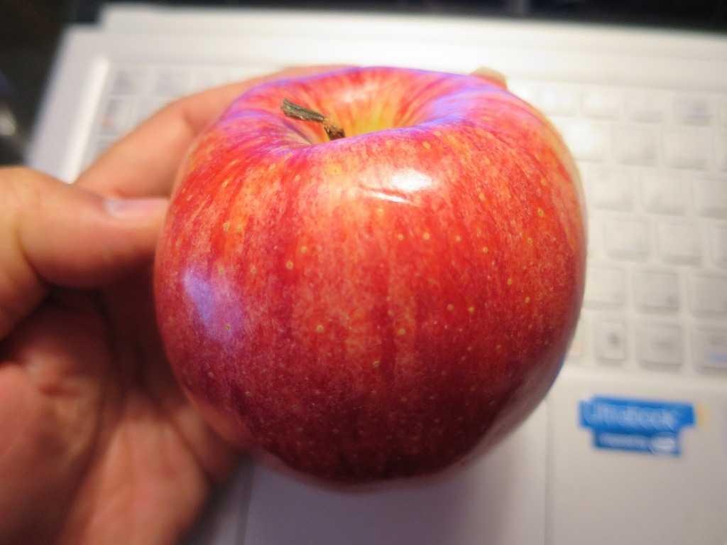 サンフランシスコ - 真っ赤なりんごを頬張るネイビーブルーのTシャツ