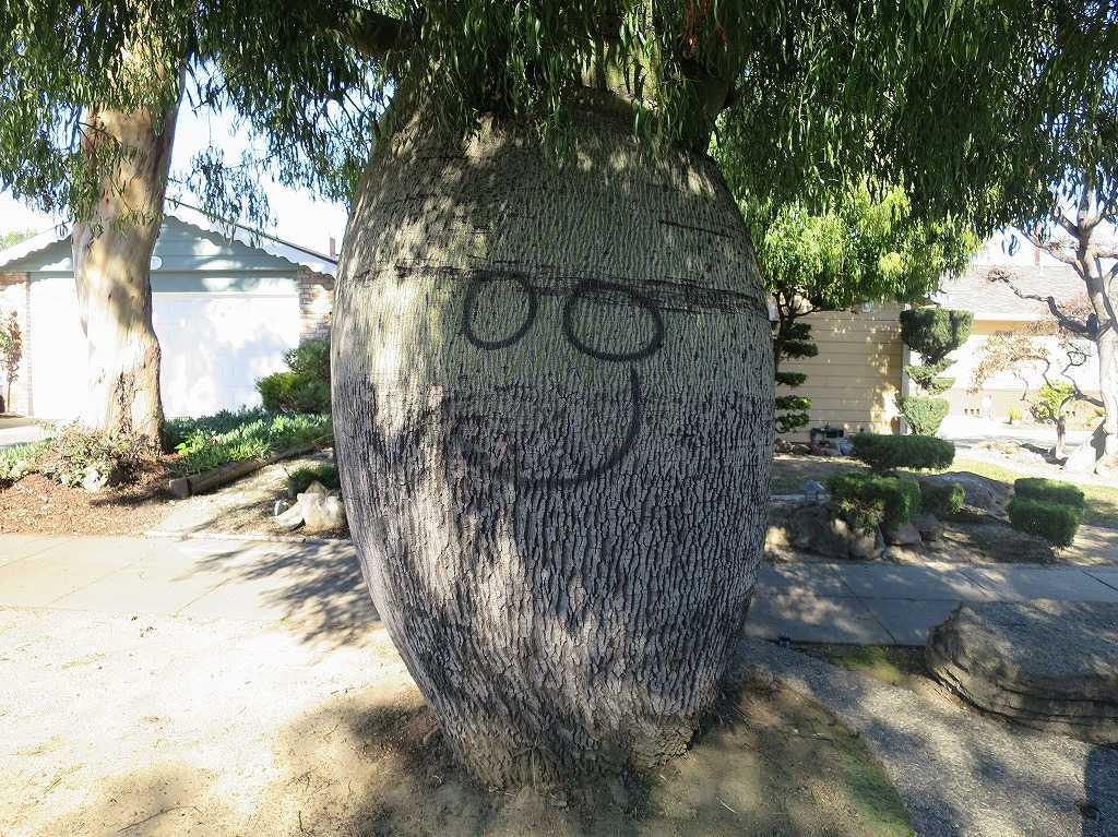 サラトガ・アベニュー近くの個性的な木