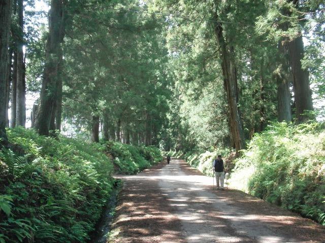 木漏れ日の杉並木街道