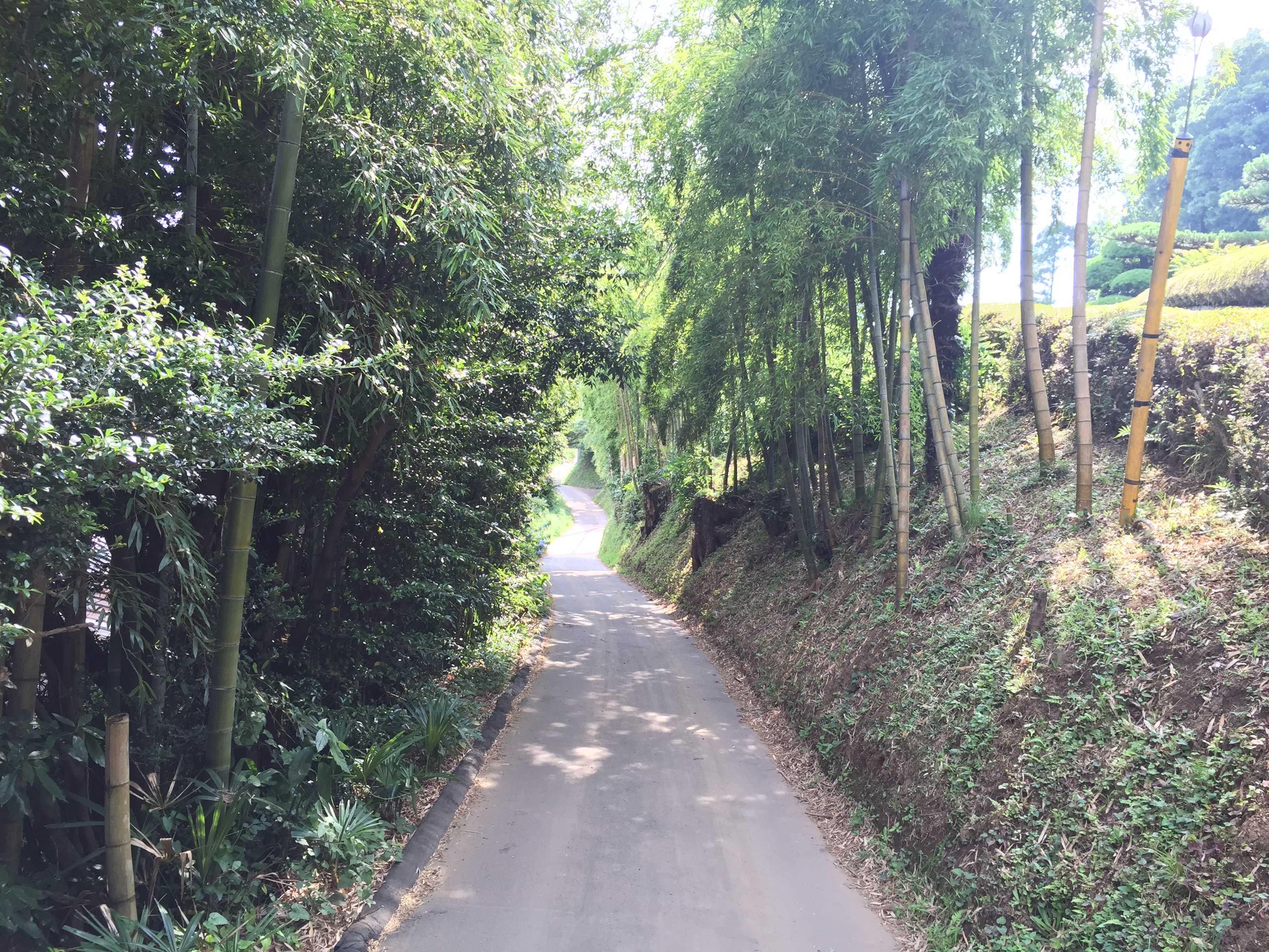 竹藪がある道