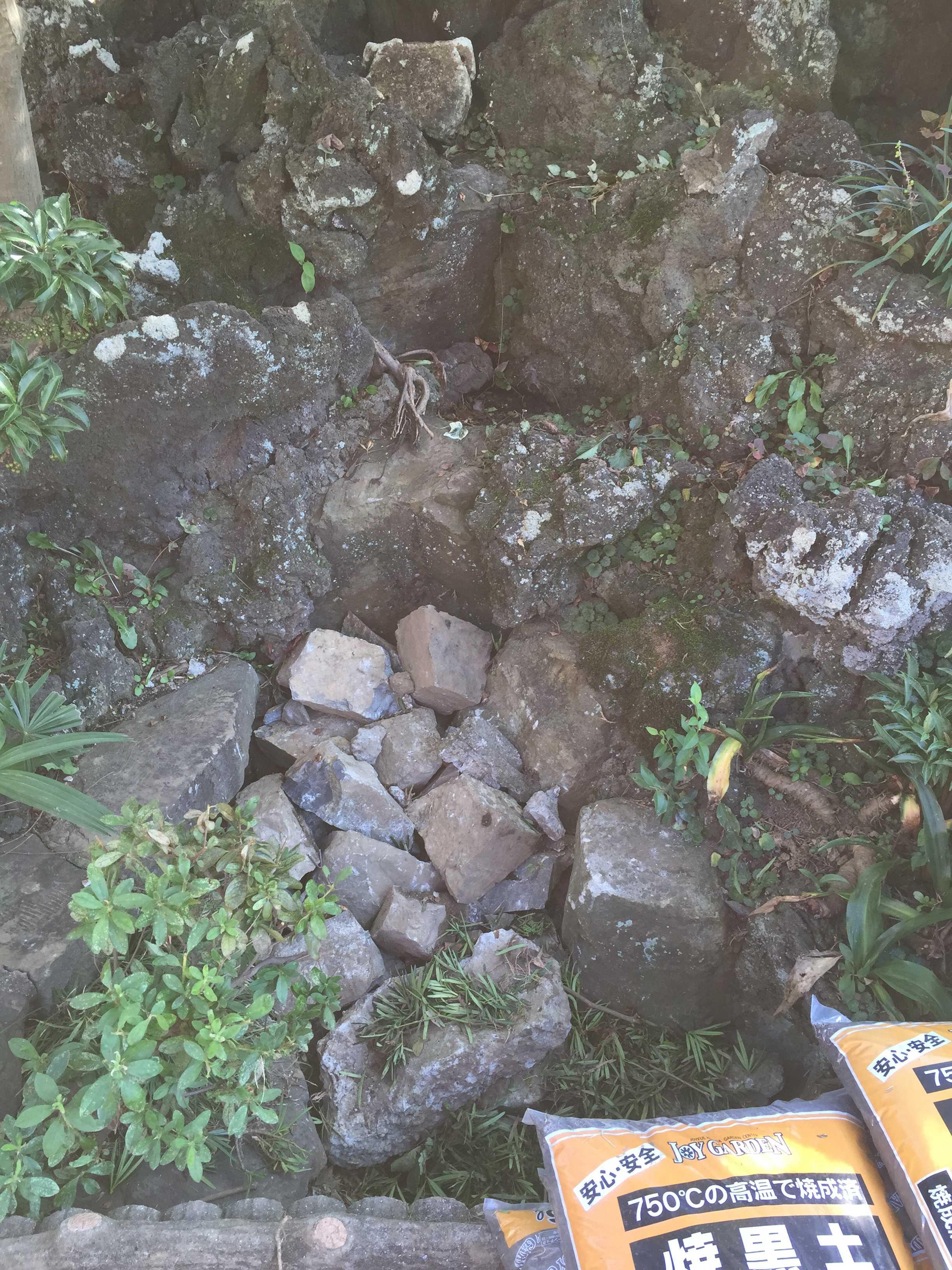 ヤマユリの球根植え付け場所 - 岩壁、岩場