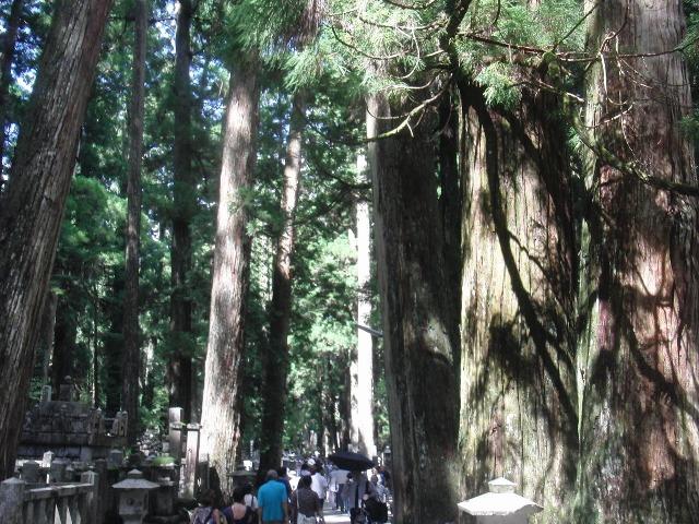 奥の院の杉