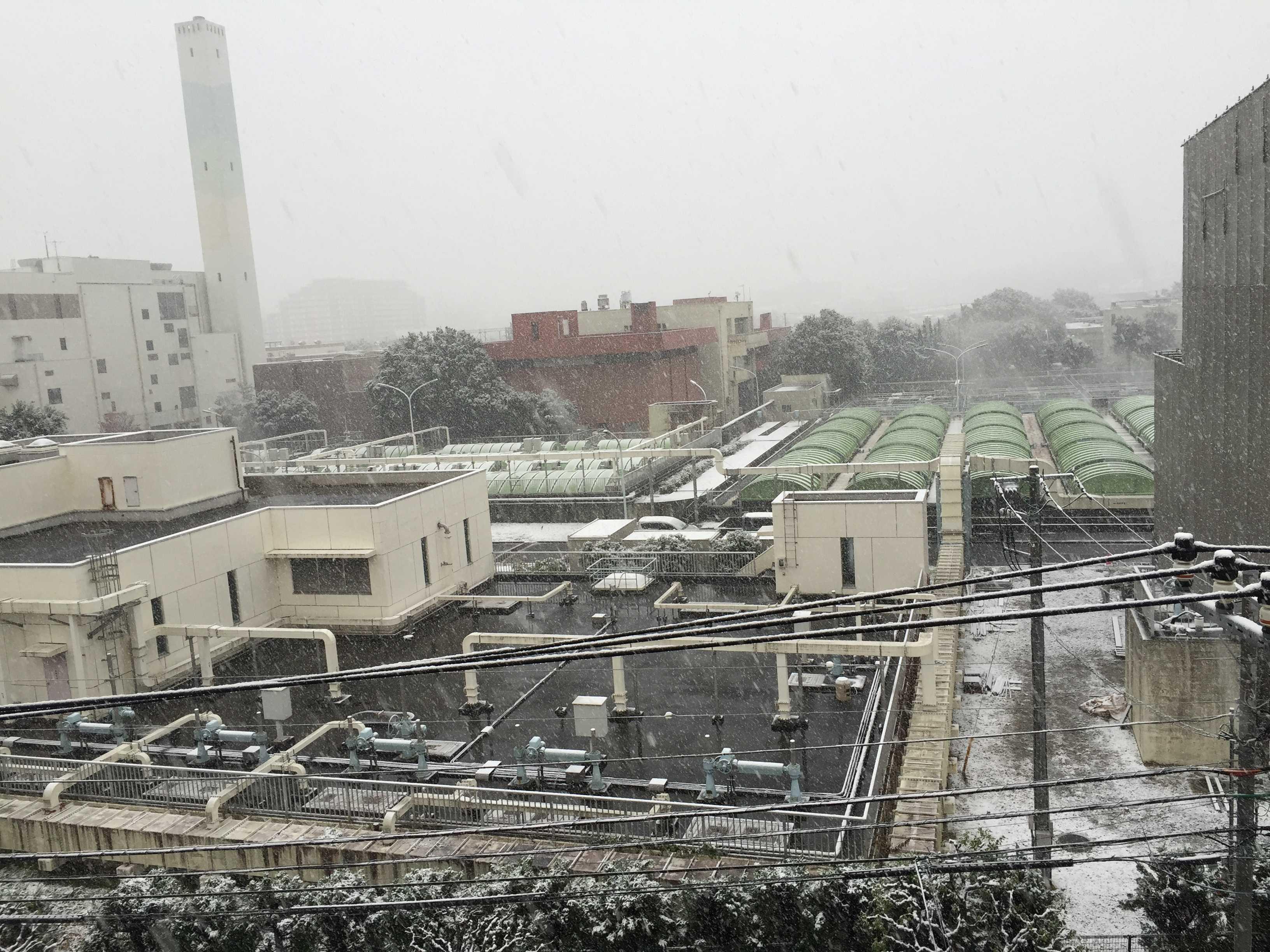 11月の雪(東京都八王子市)