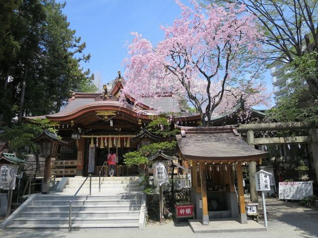 子安神社(東京都八王子市)の満開の桜