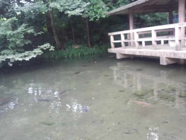 黒川清流公園の清水
