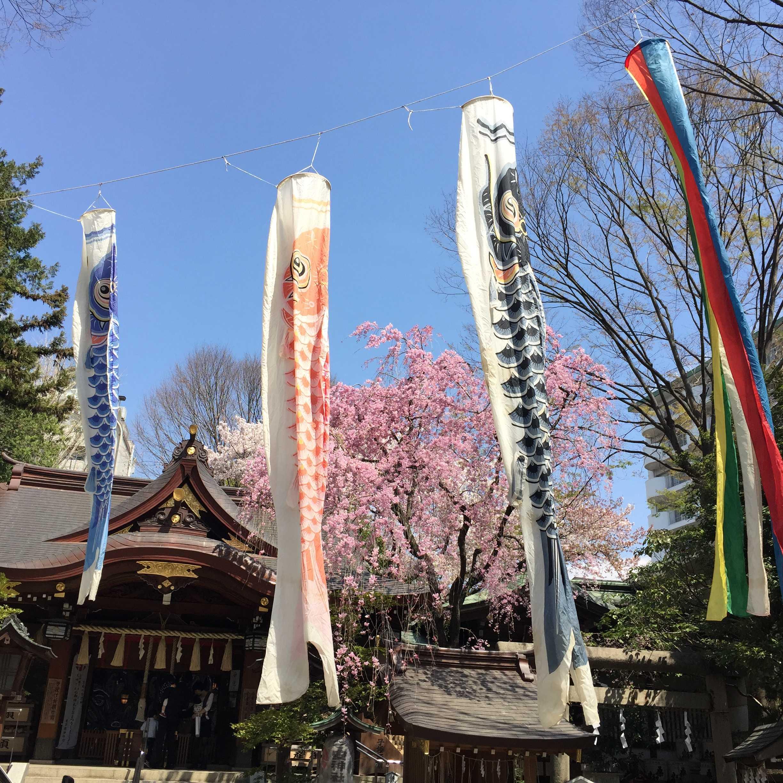 子安神社(東京・八王子)の鯉のぼりと枝垂れ桜