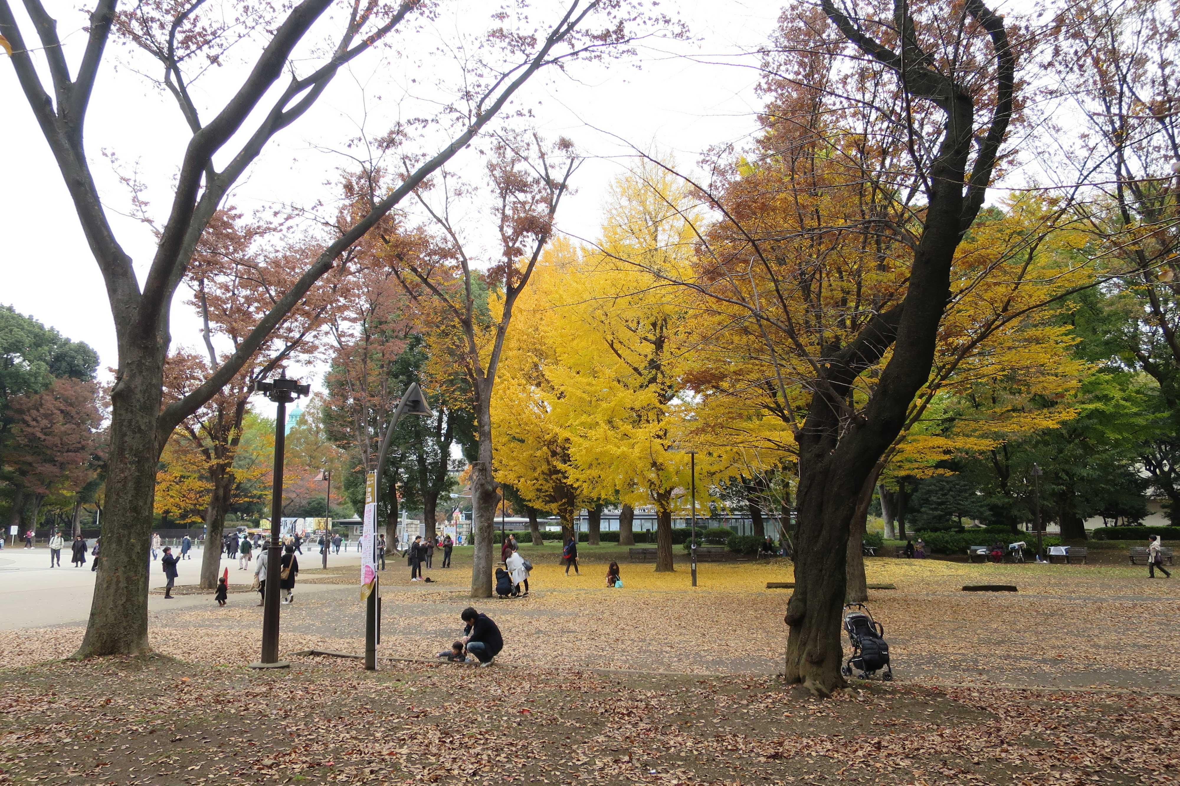 上野の森のイチョウ