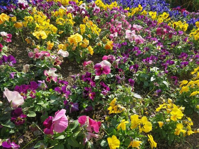 花咲き乱れる高知市内