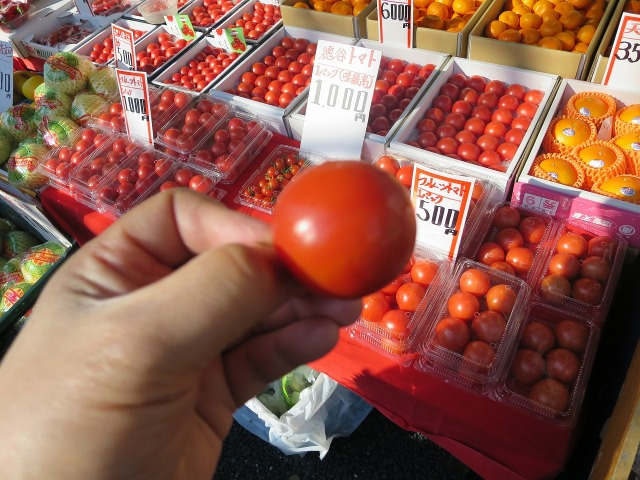 高知・日曜市の徳谷トマト