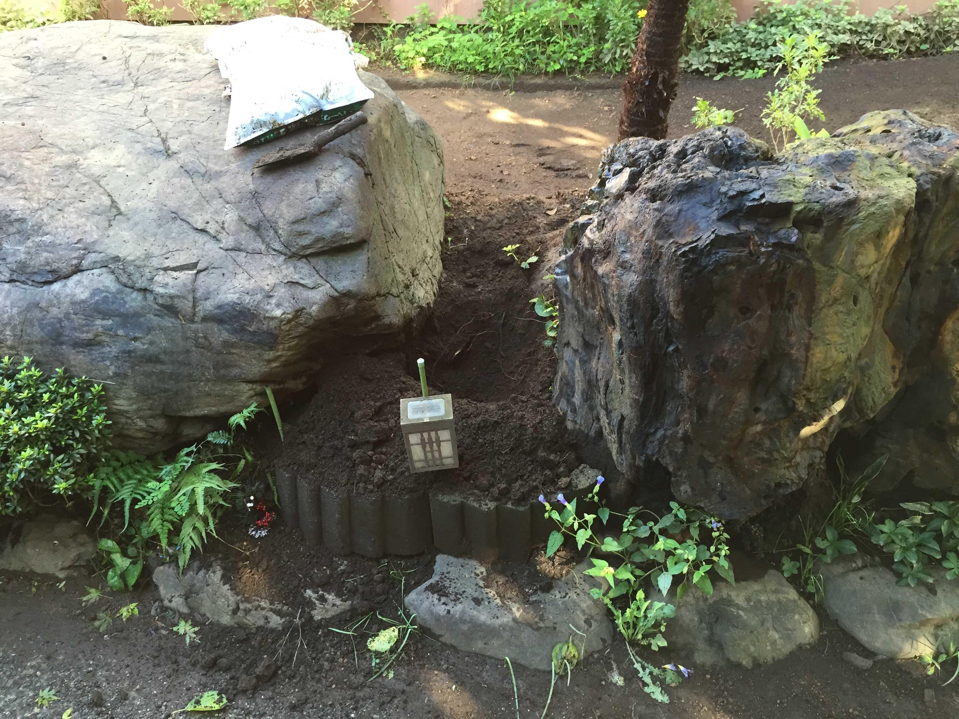 サルスベリ夏祭りの植え穴