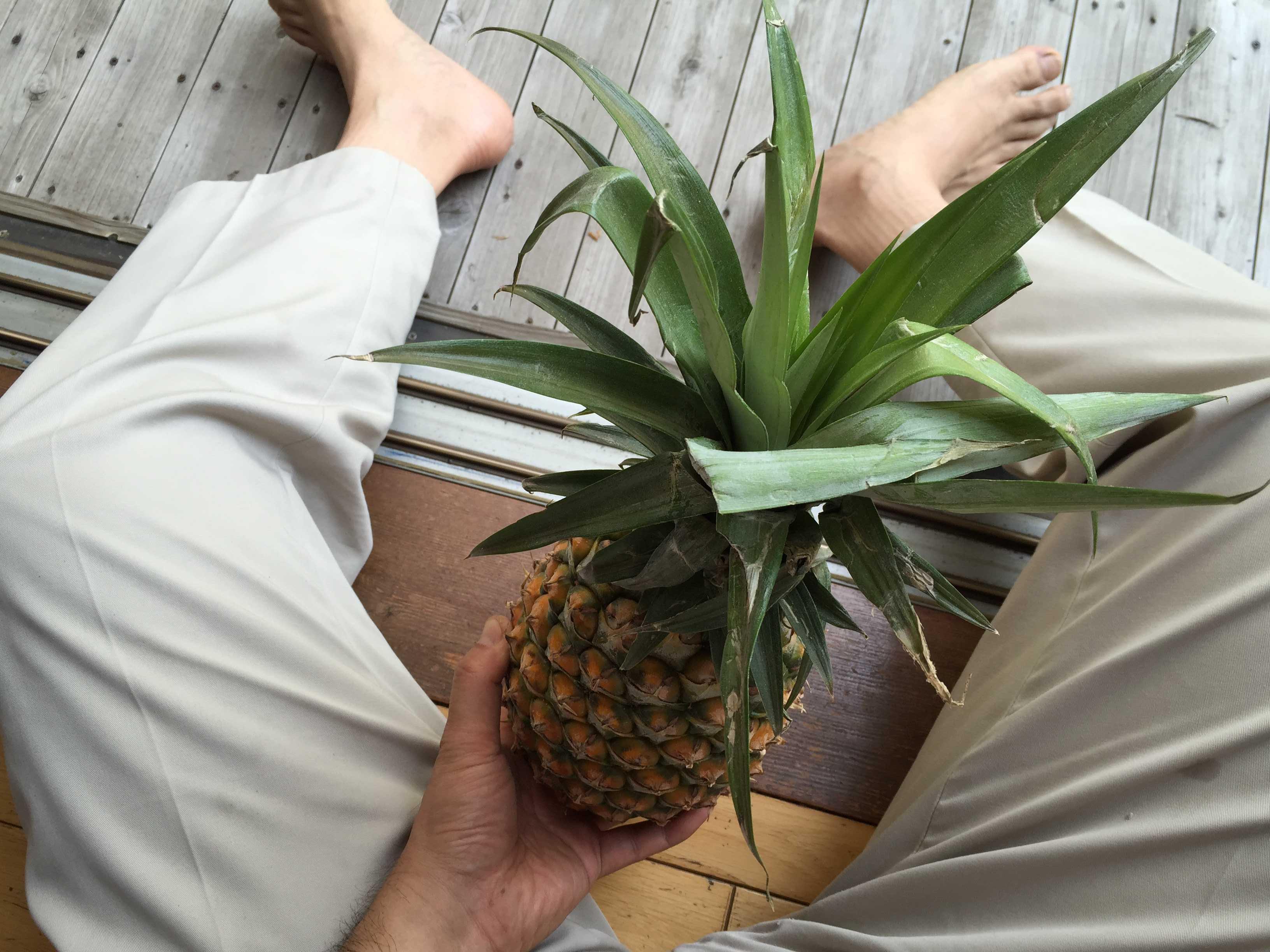 トロピカルゴールド・パイナップル