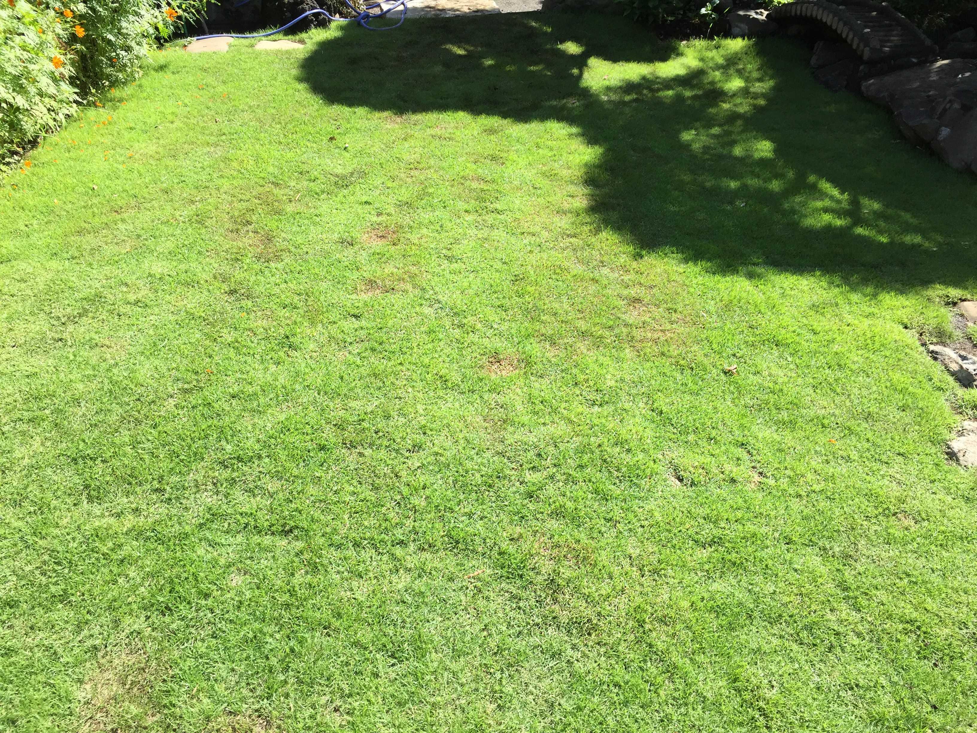 緑の芝生 TM9