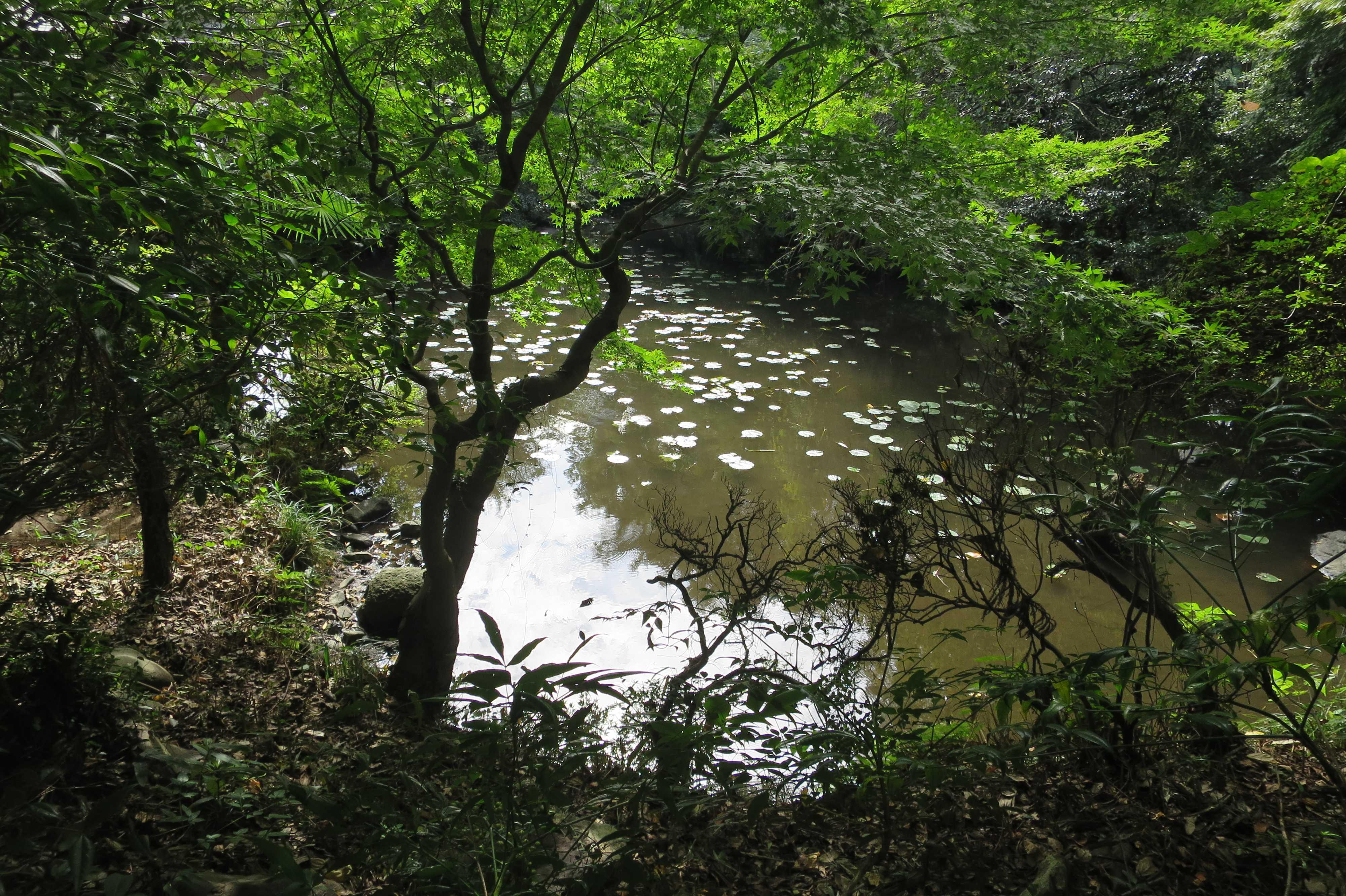 無量光寺の御影の池