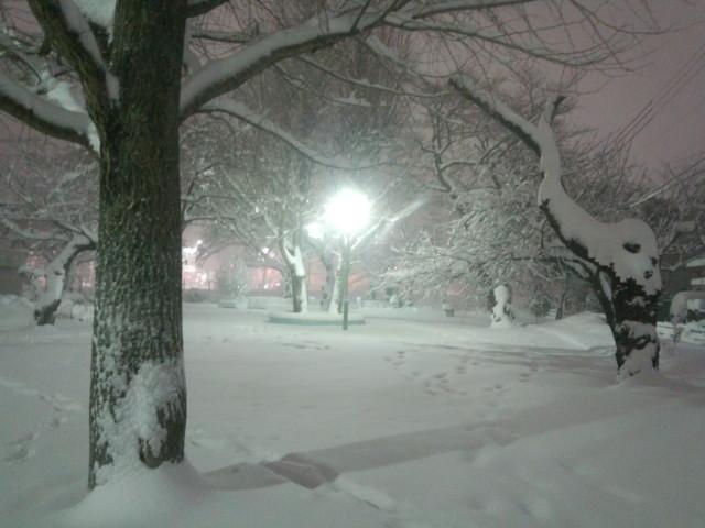 大雪と公園