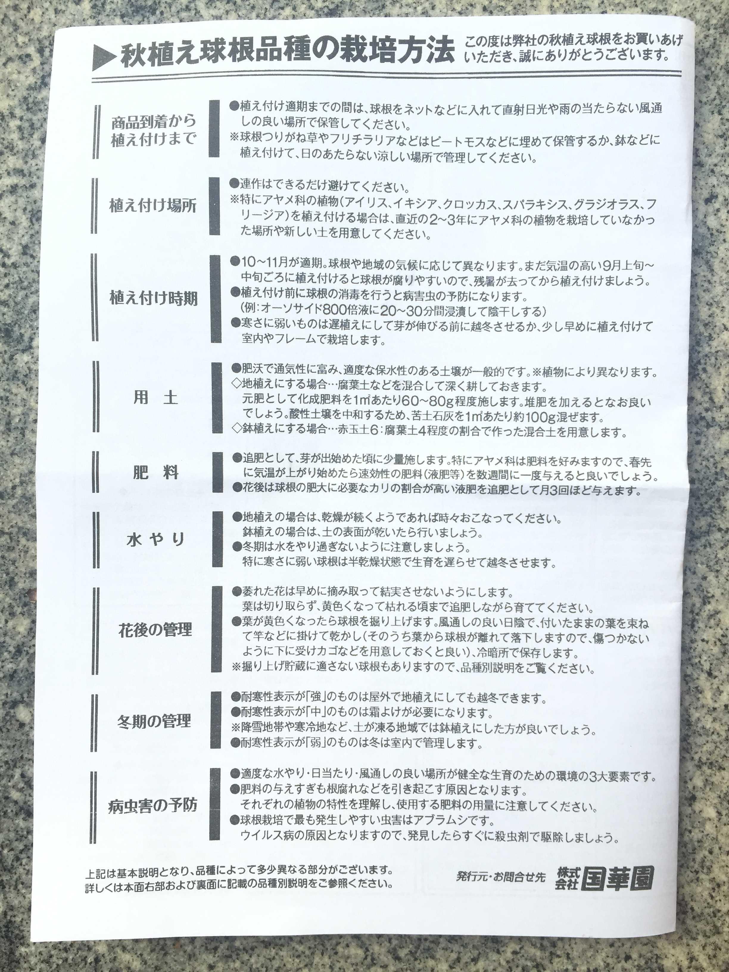 秋植え球根品種の栽培方法(国華園) - 水仙の球根の植え方