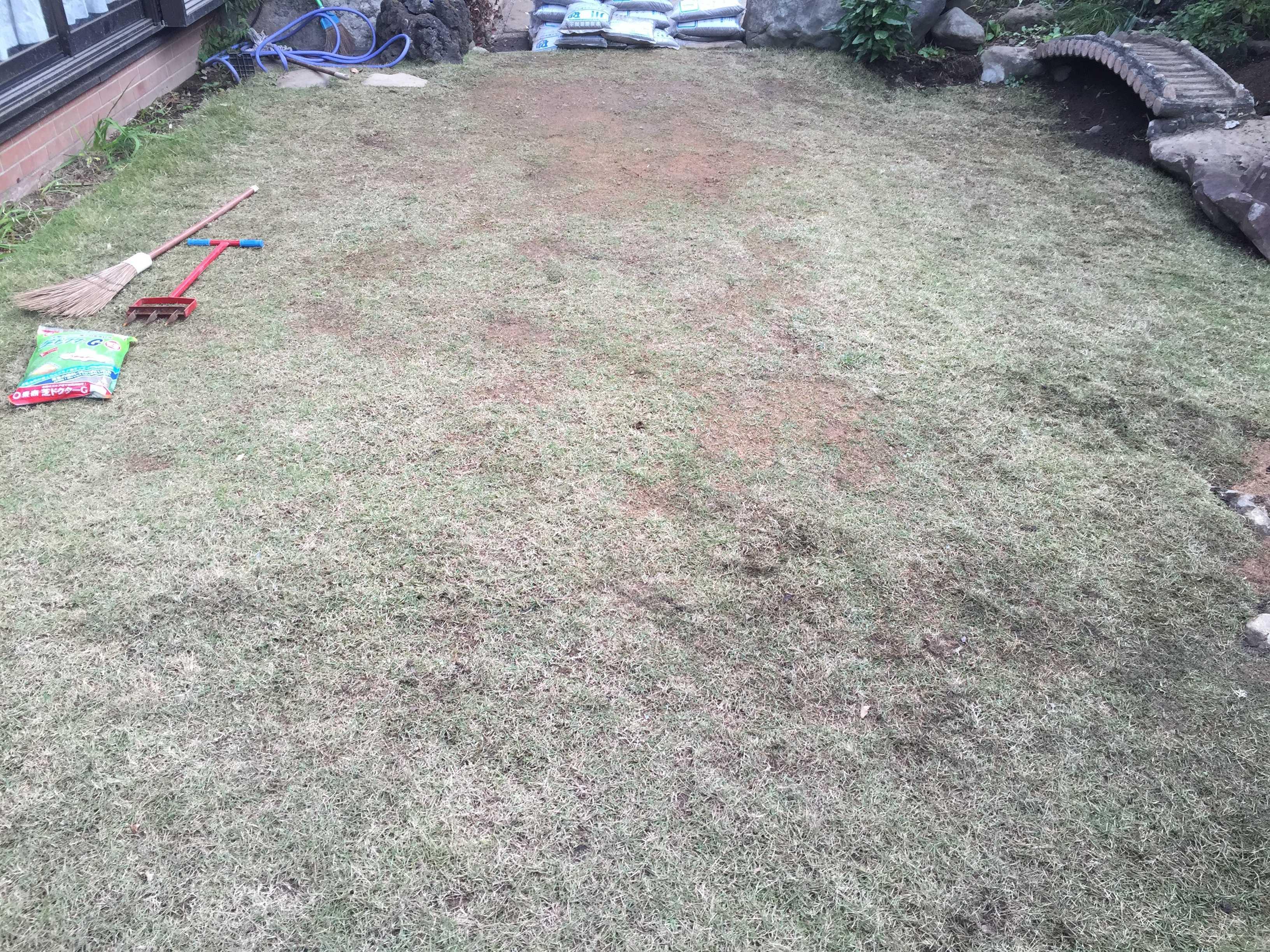 植え付け 5ヶ月。エアレーション前の芝生・TM9(ティーエムナイン)
