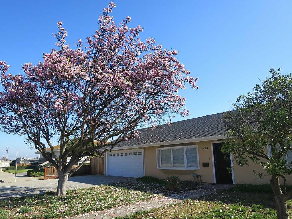 サラトガのピンクの木