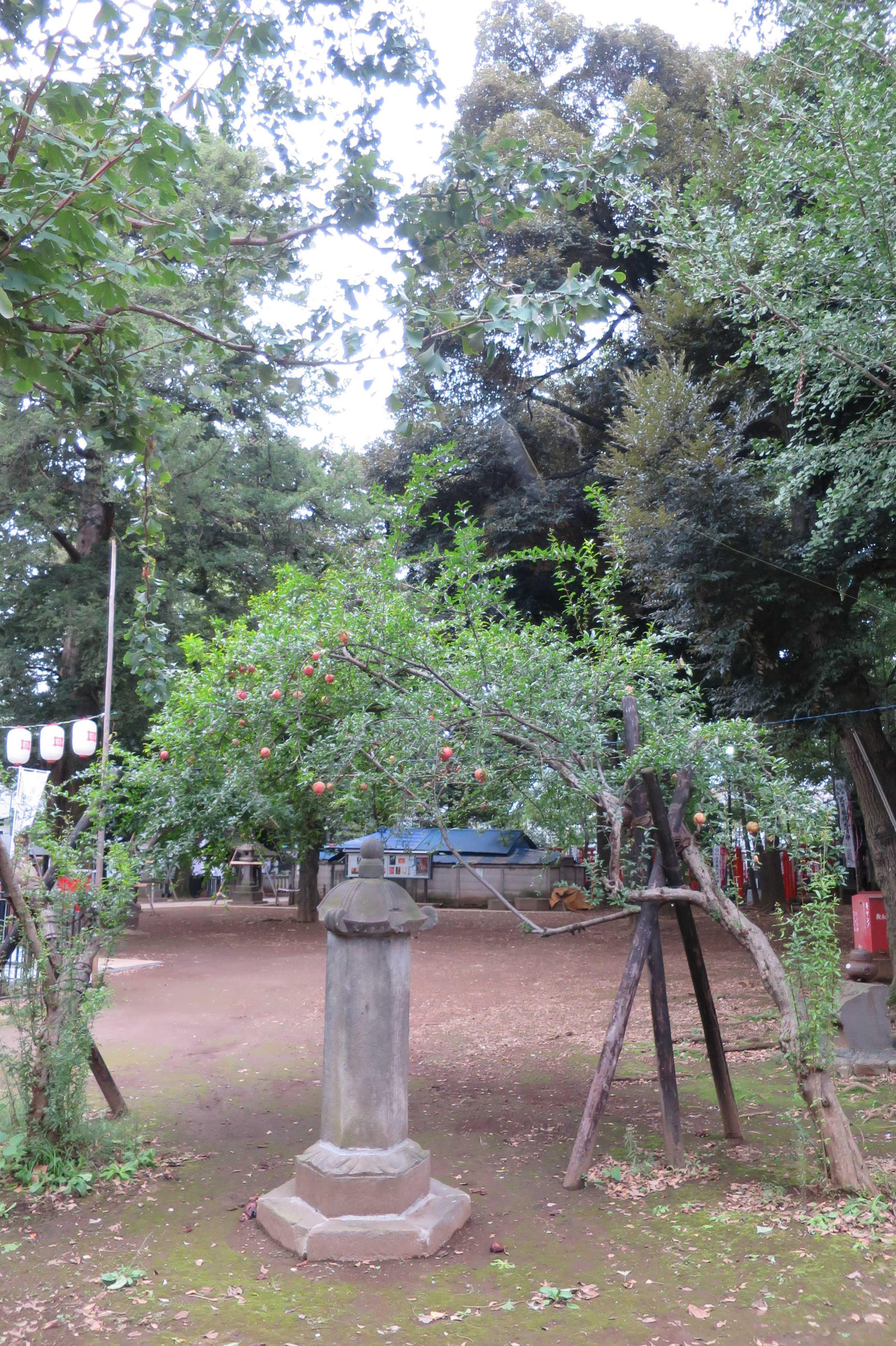 東京 雑司が谷・鬼子母神堂 - お堂の横の石榴の木