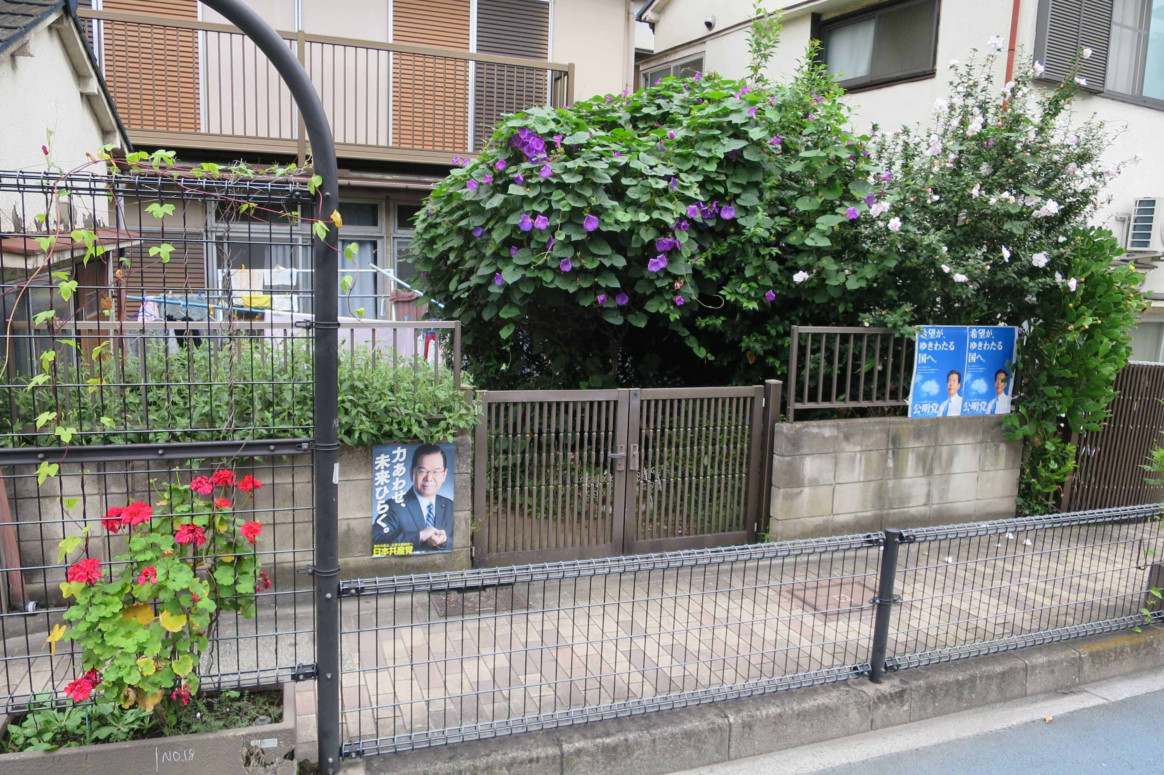 紫のアサガオ - 東京都品川区