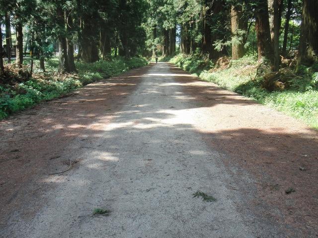杉並木街道