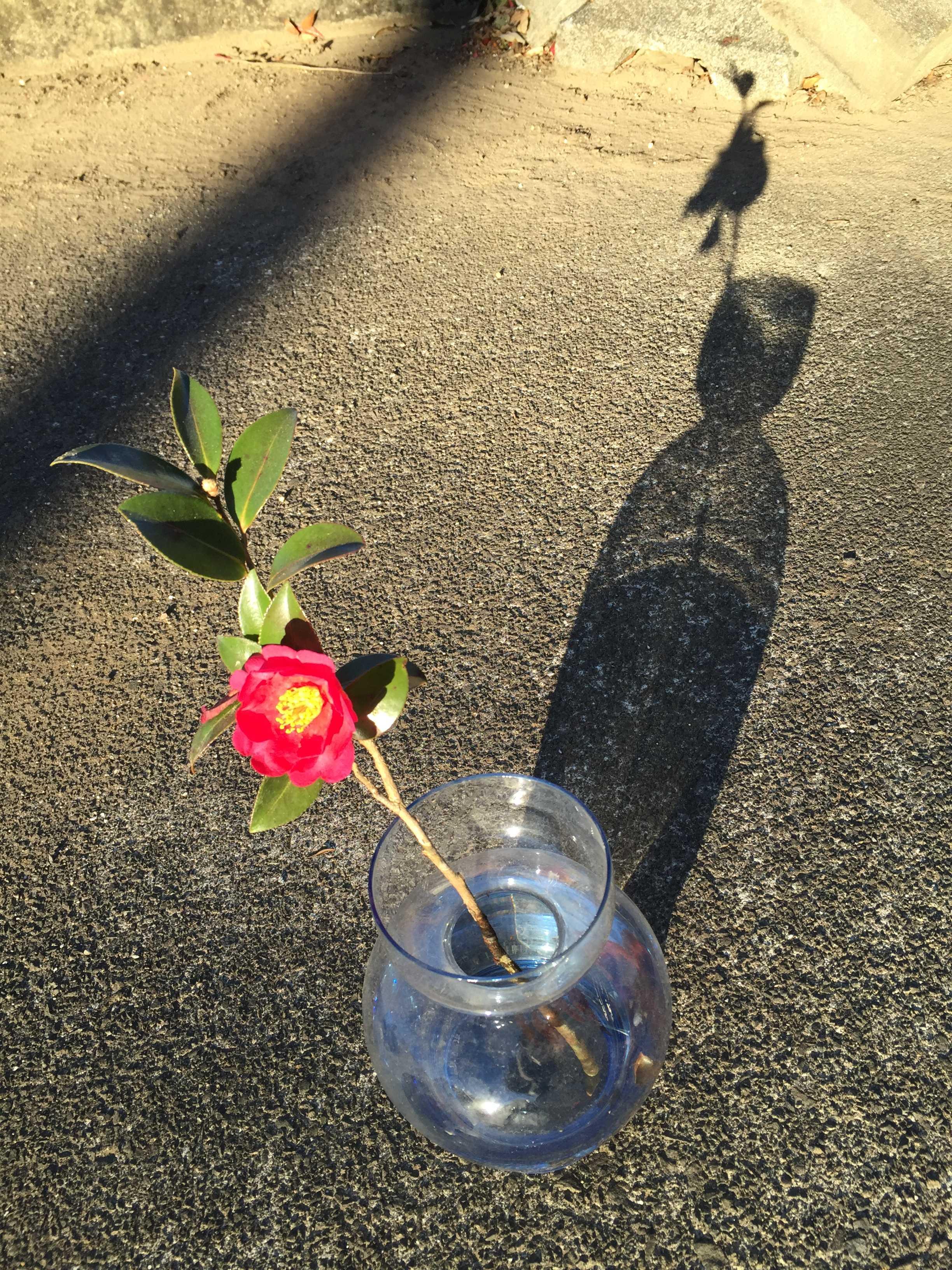一輪挿しのガラスの花瓶に生けたタチカンツバキ(立寒椿)の勘次郎