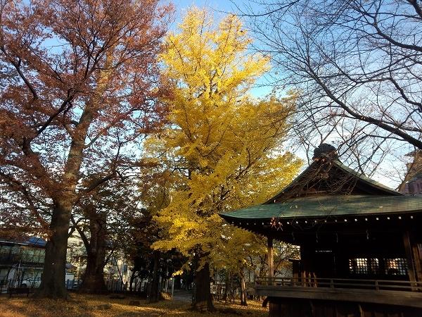 北野神社(北野天満社)のイチョウ
