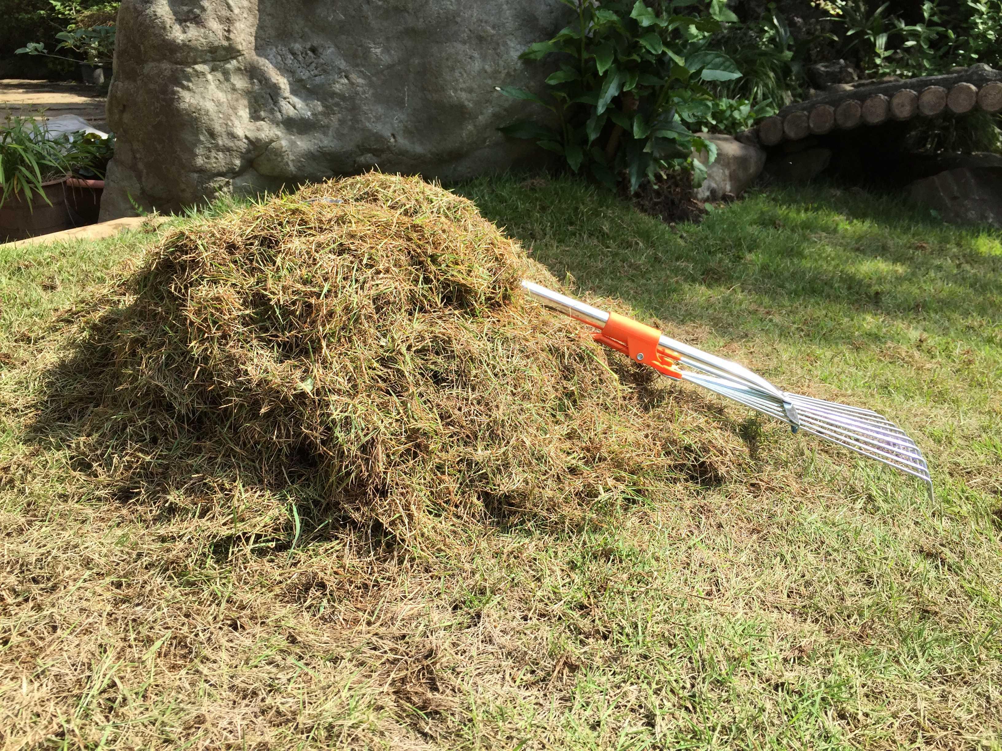 レーキで掻き出した芝生と土との間に堆積していたサッチ(芝カス)