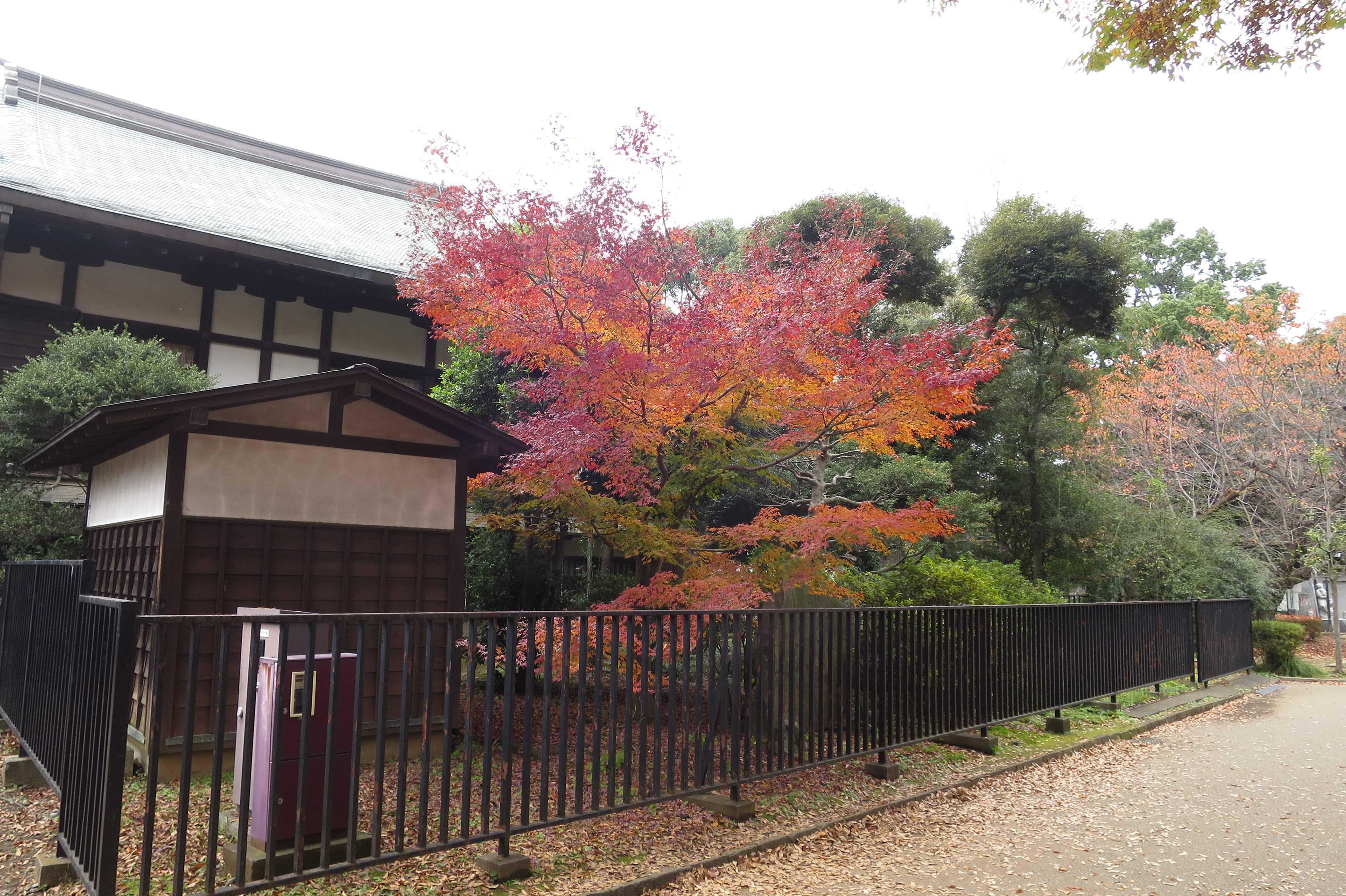 秋の上野公園