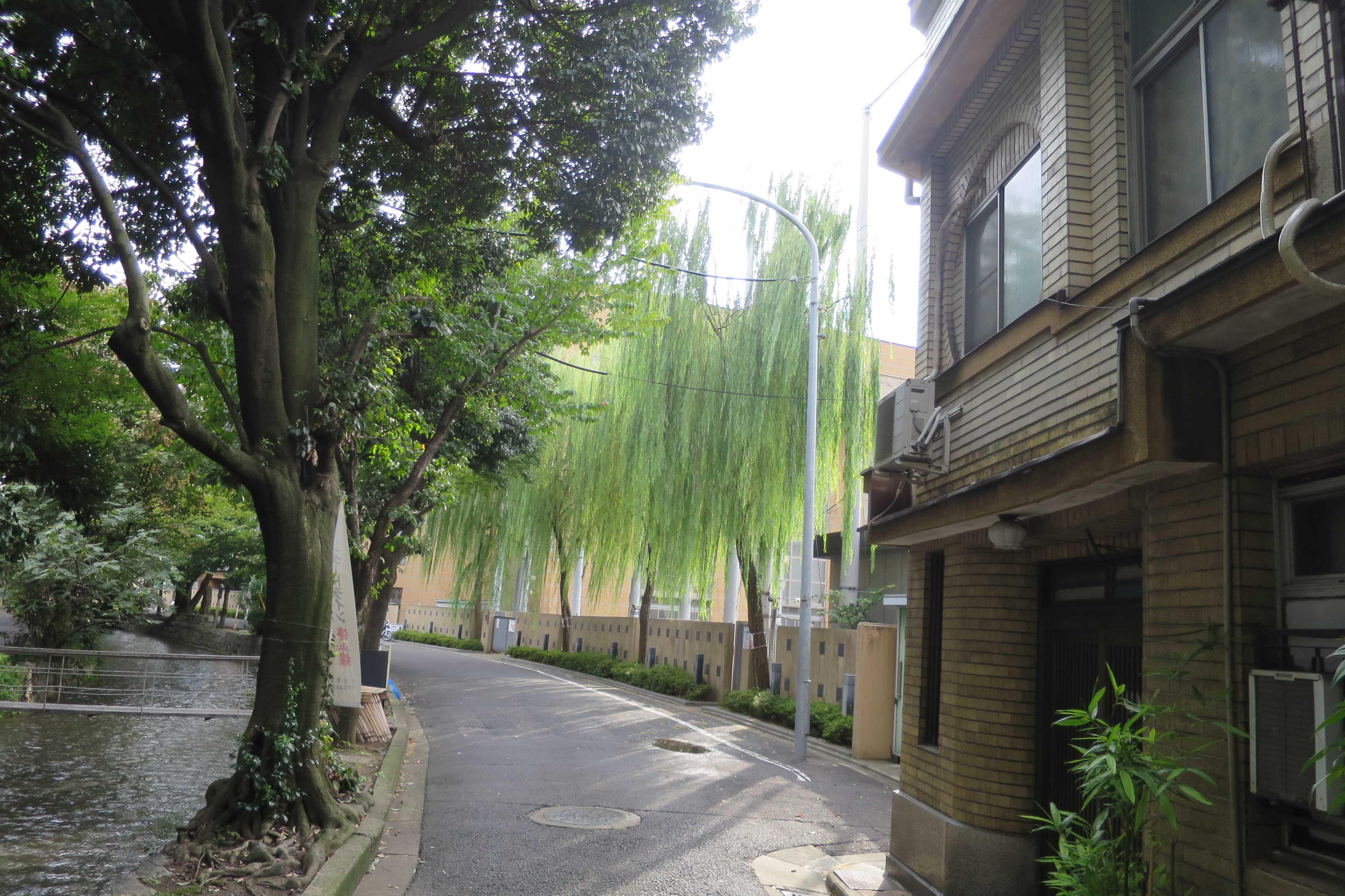京都・五条楽園 - 美しく枝垂れる柳の木