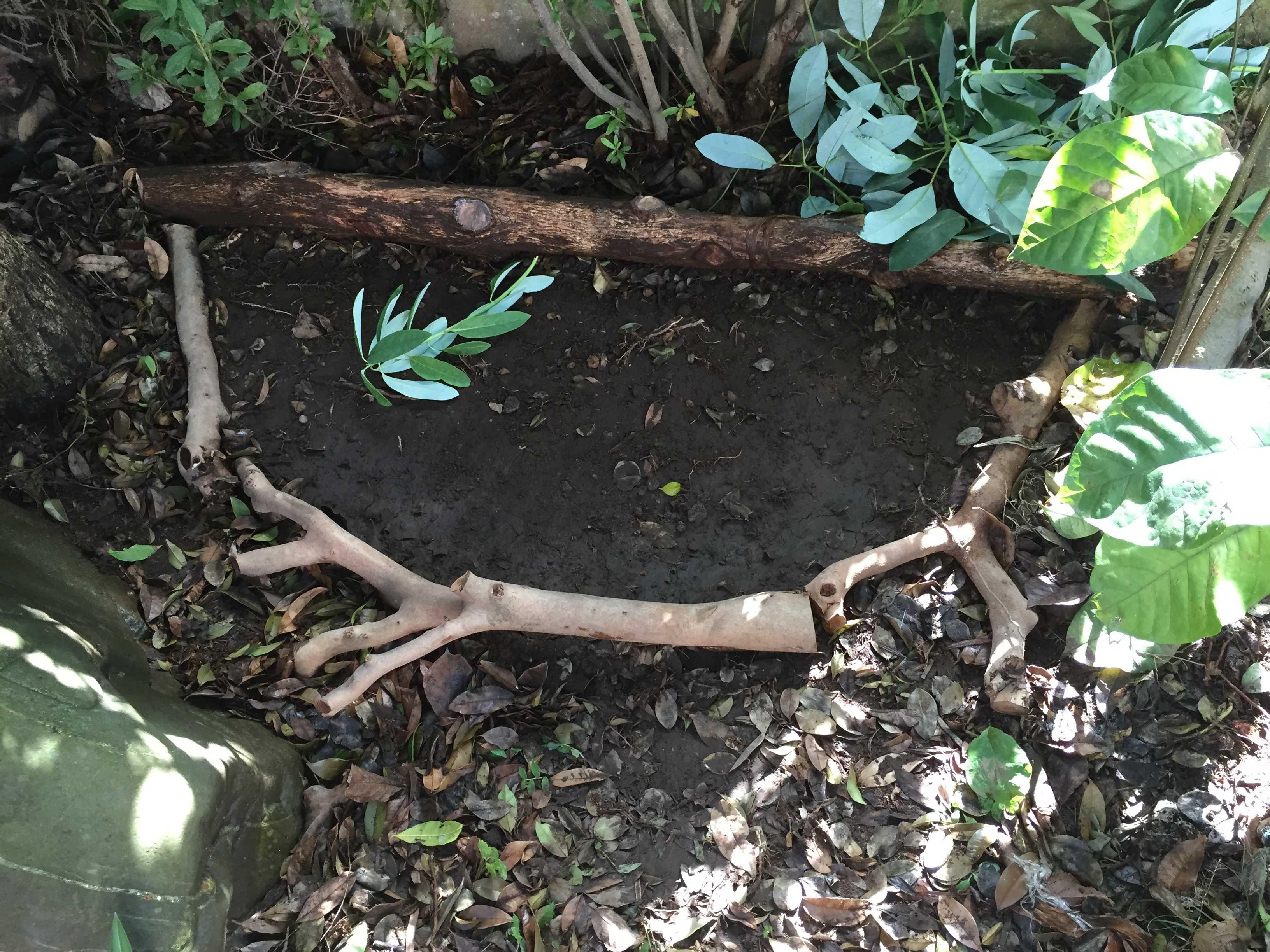 ヤマユリ庭植え - 庭植えの植え穴