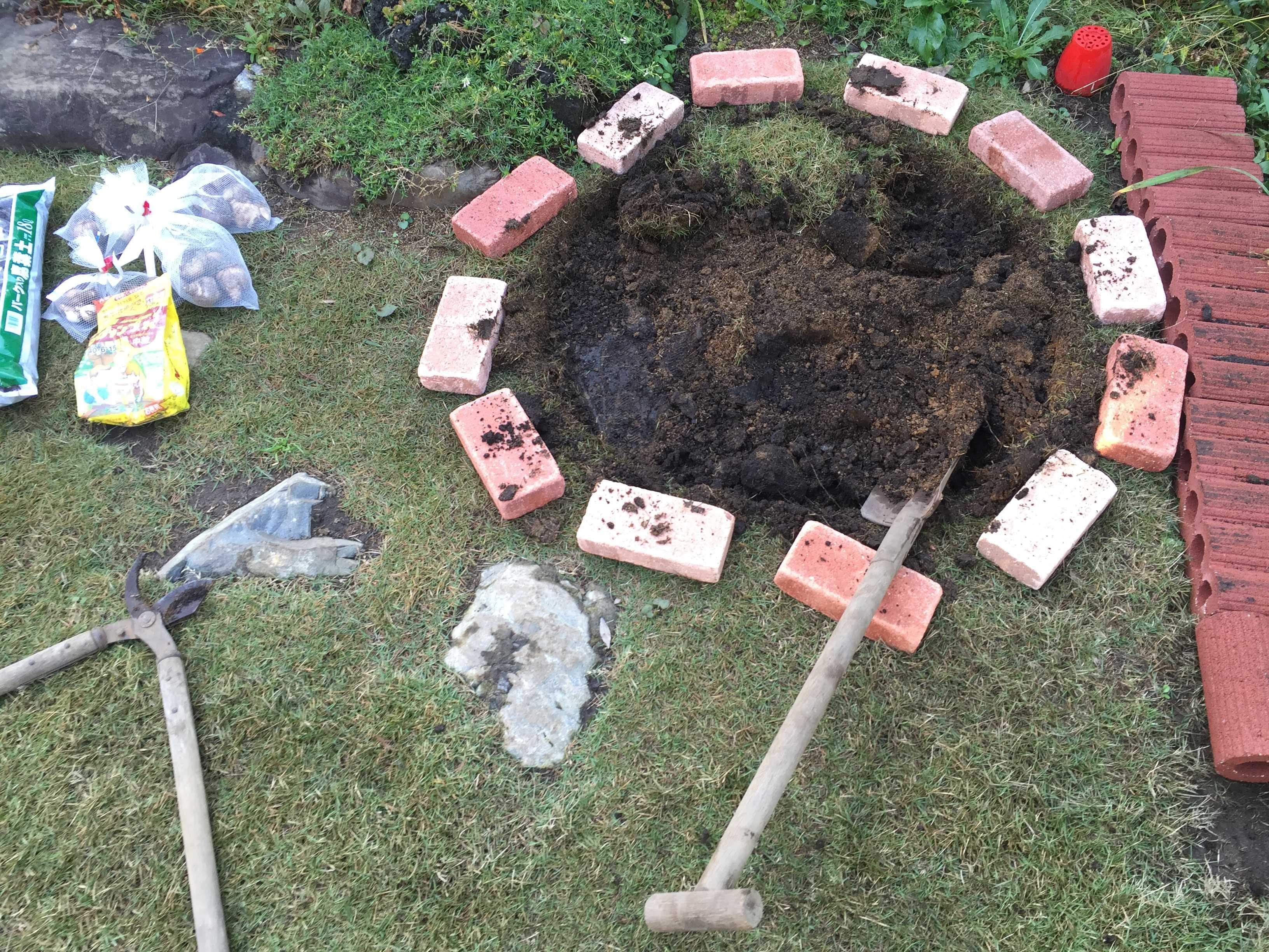 芝生はがし - 水仙の球根の植え方