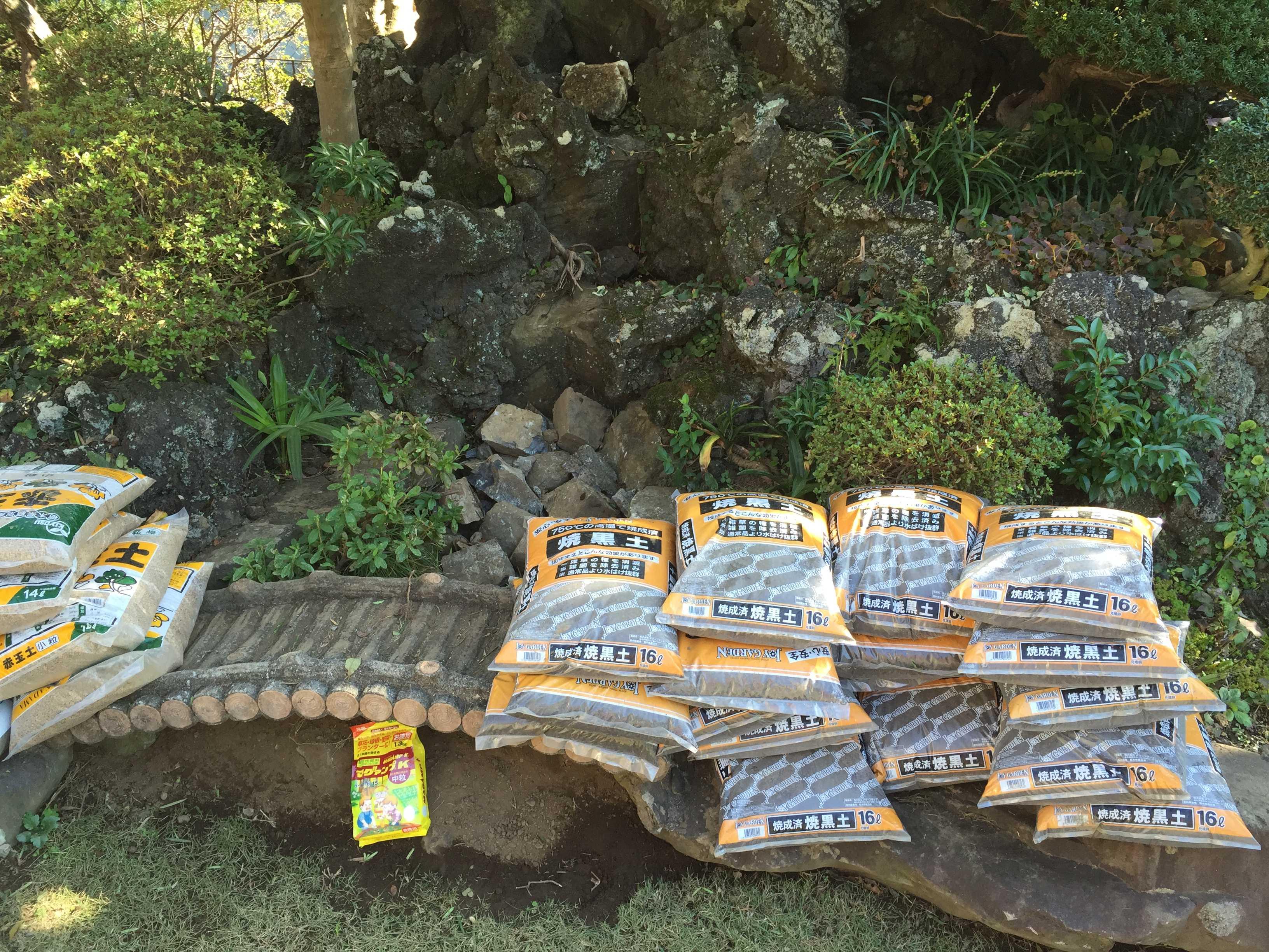 ヤマユリの球根植え付け - 焼成済み焼黒土