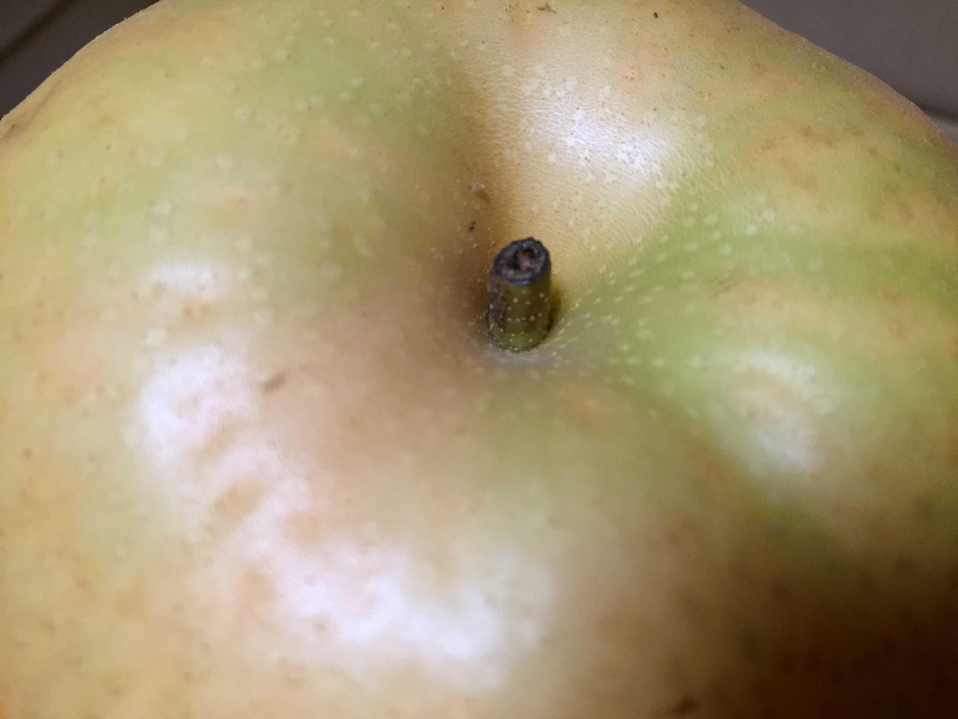 里見梨のへた