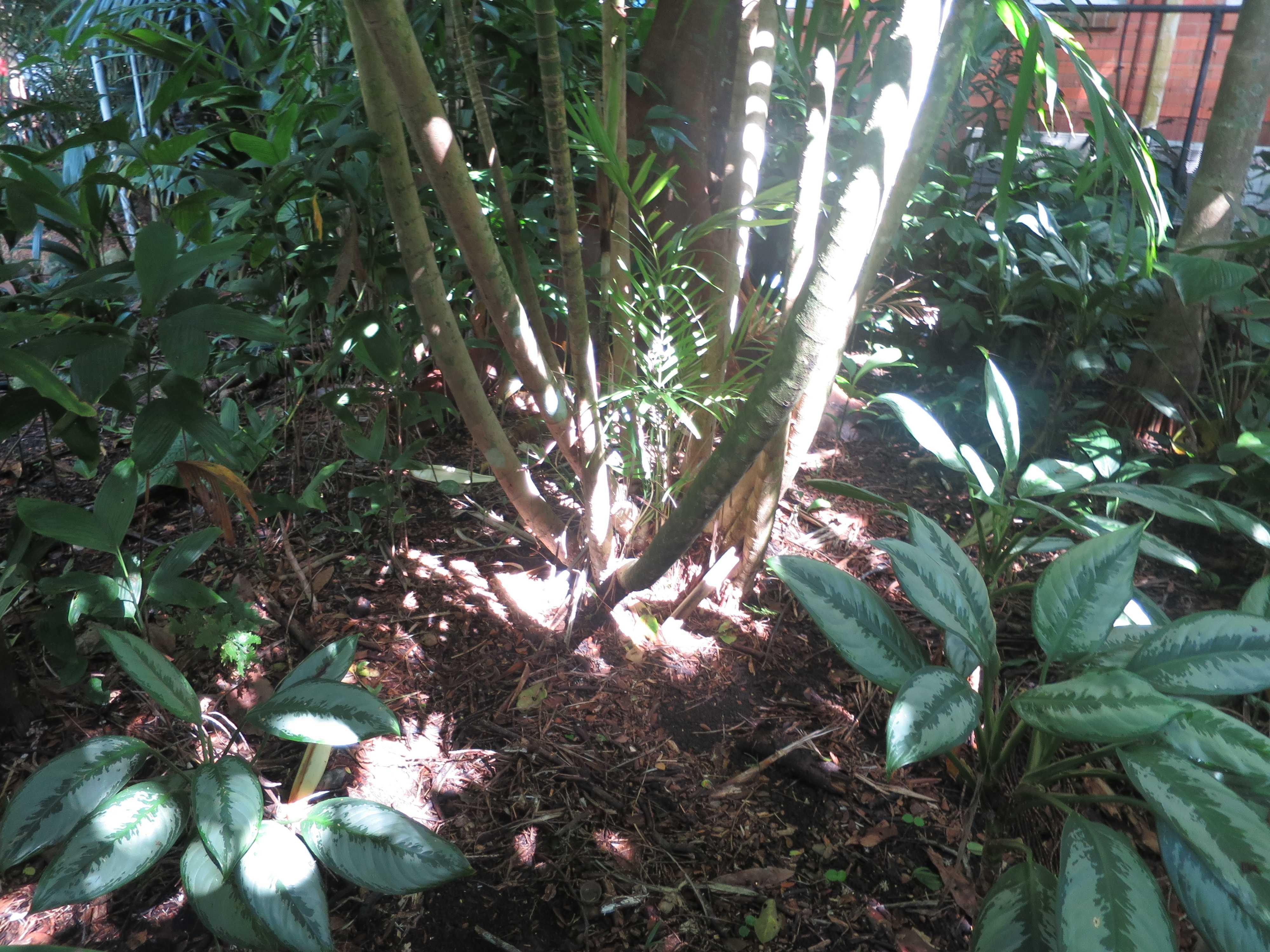 木の根元 - ブーメランの素材