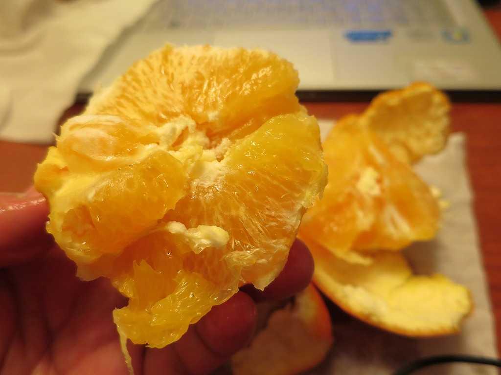 サンノゼ - 頂いたオレンジ