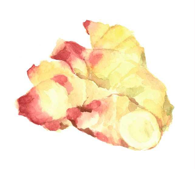 新生姜,野菜,夏,水彩画,イラスト,素材,食材