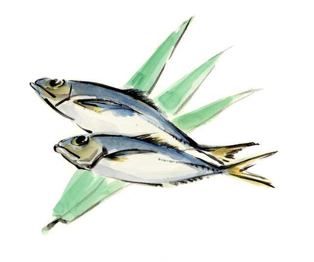 仕事絵,鯵,魚介,,高塚由子の水彩画,イラスト,食べ物