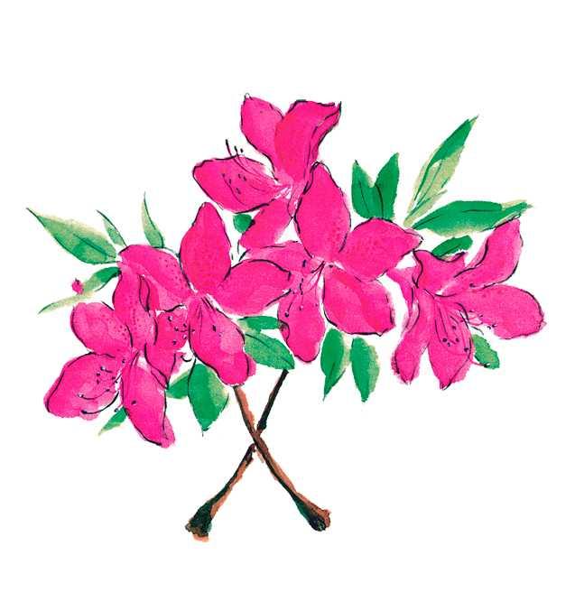 サツキ,五月,花,春,植物,水彩画,イラスト